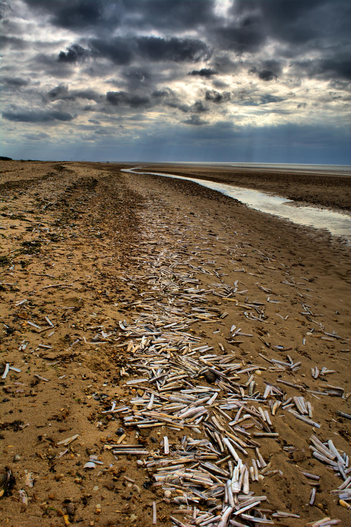 1000 shells on the shore by Dean kay