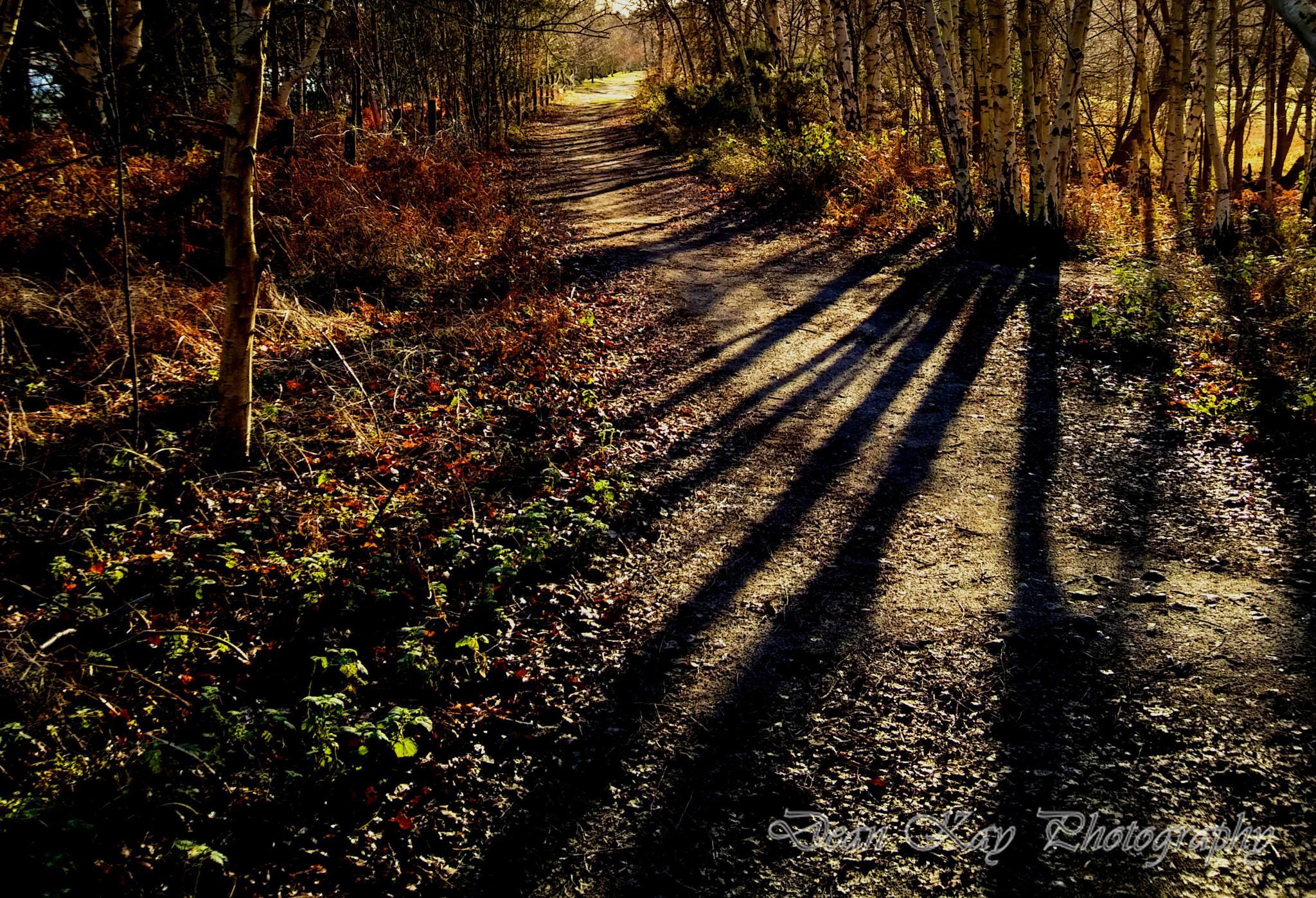 the hidden path by Dean kay