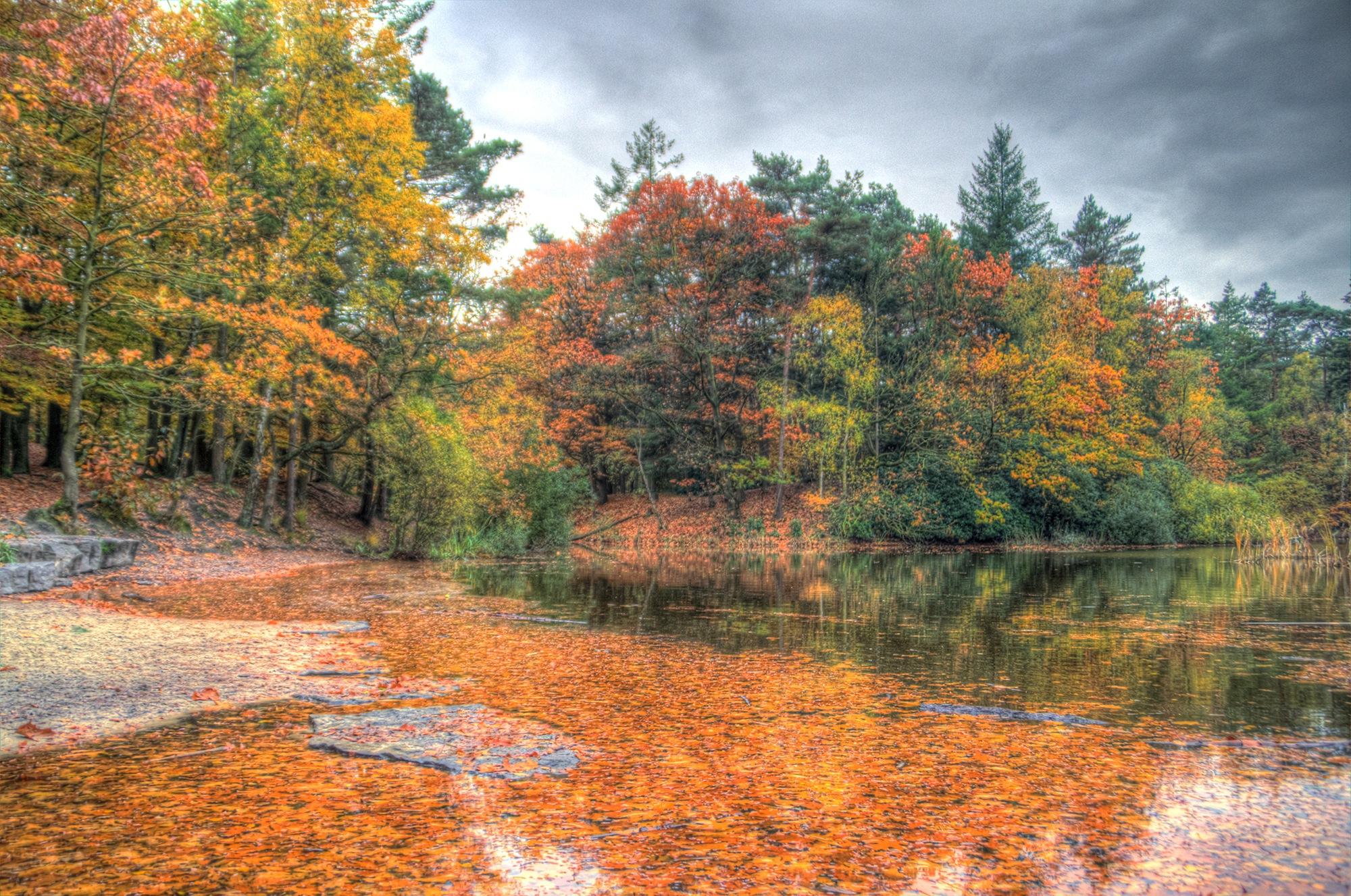 Autumn XII by Watze D. de Haan