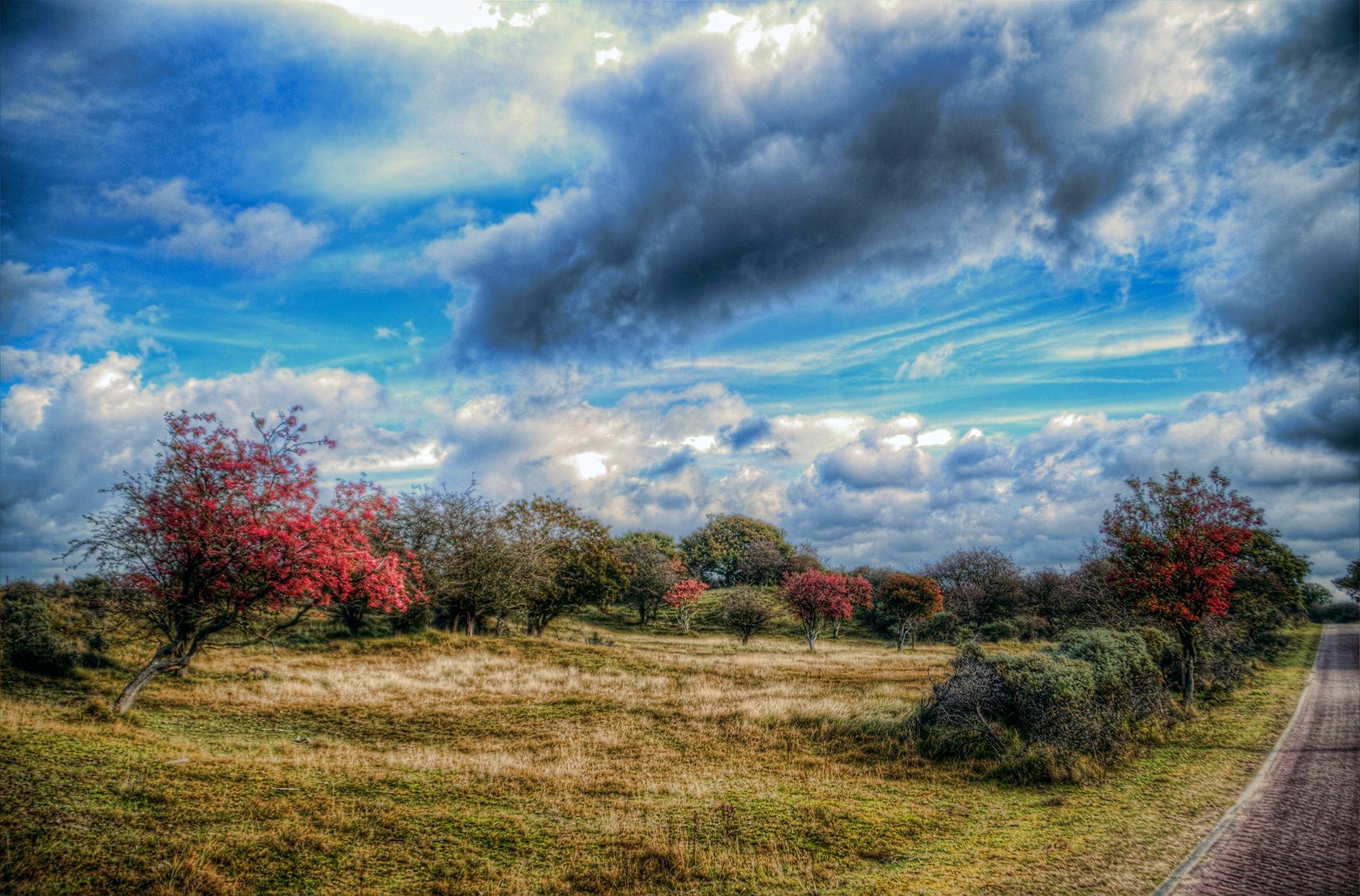 Autumn IX by Watze D. de Haan