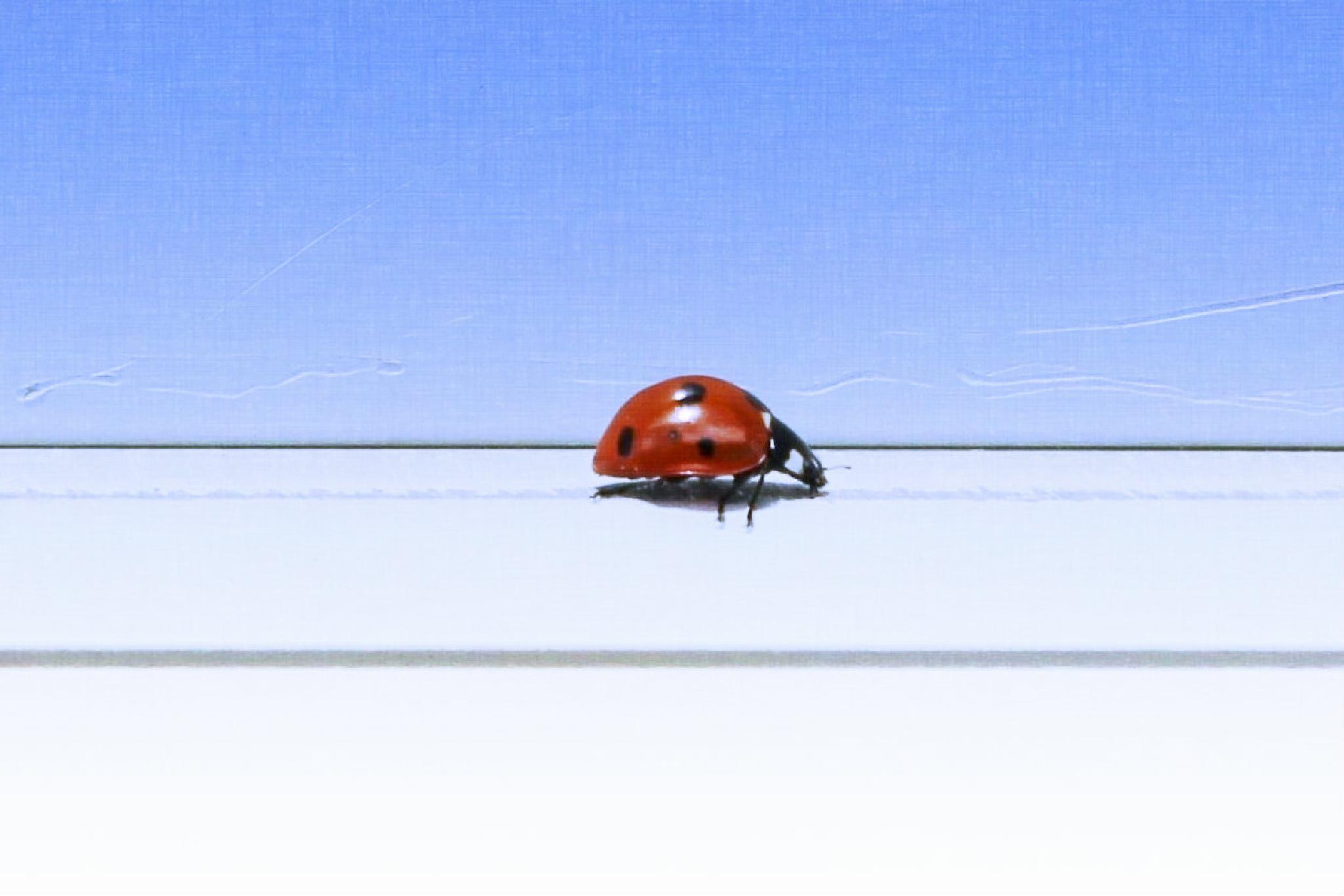Ladybug Crawl by Lucretia Bittner