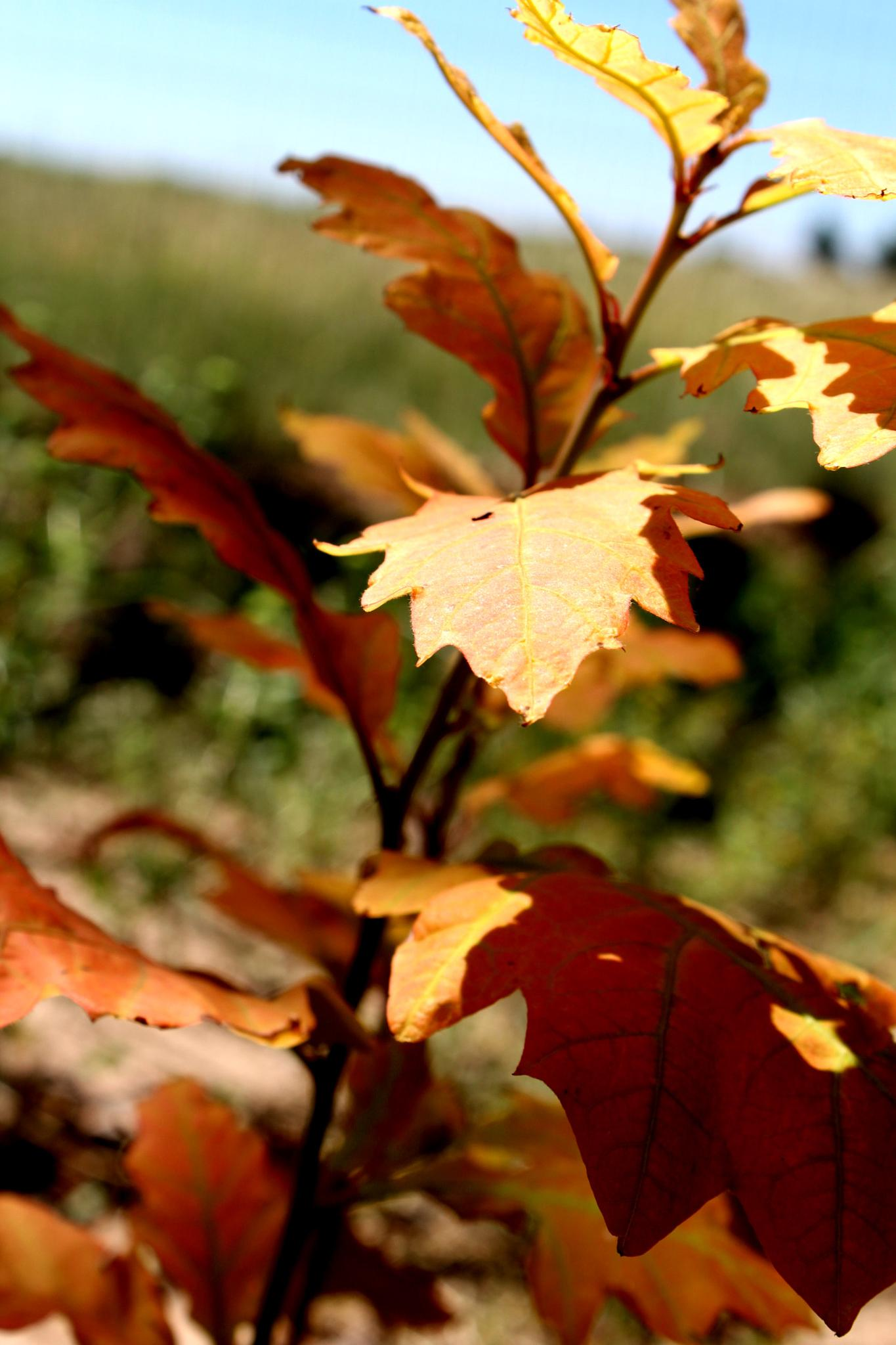 Shades of Autumn by Lucretia Bittner
