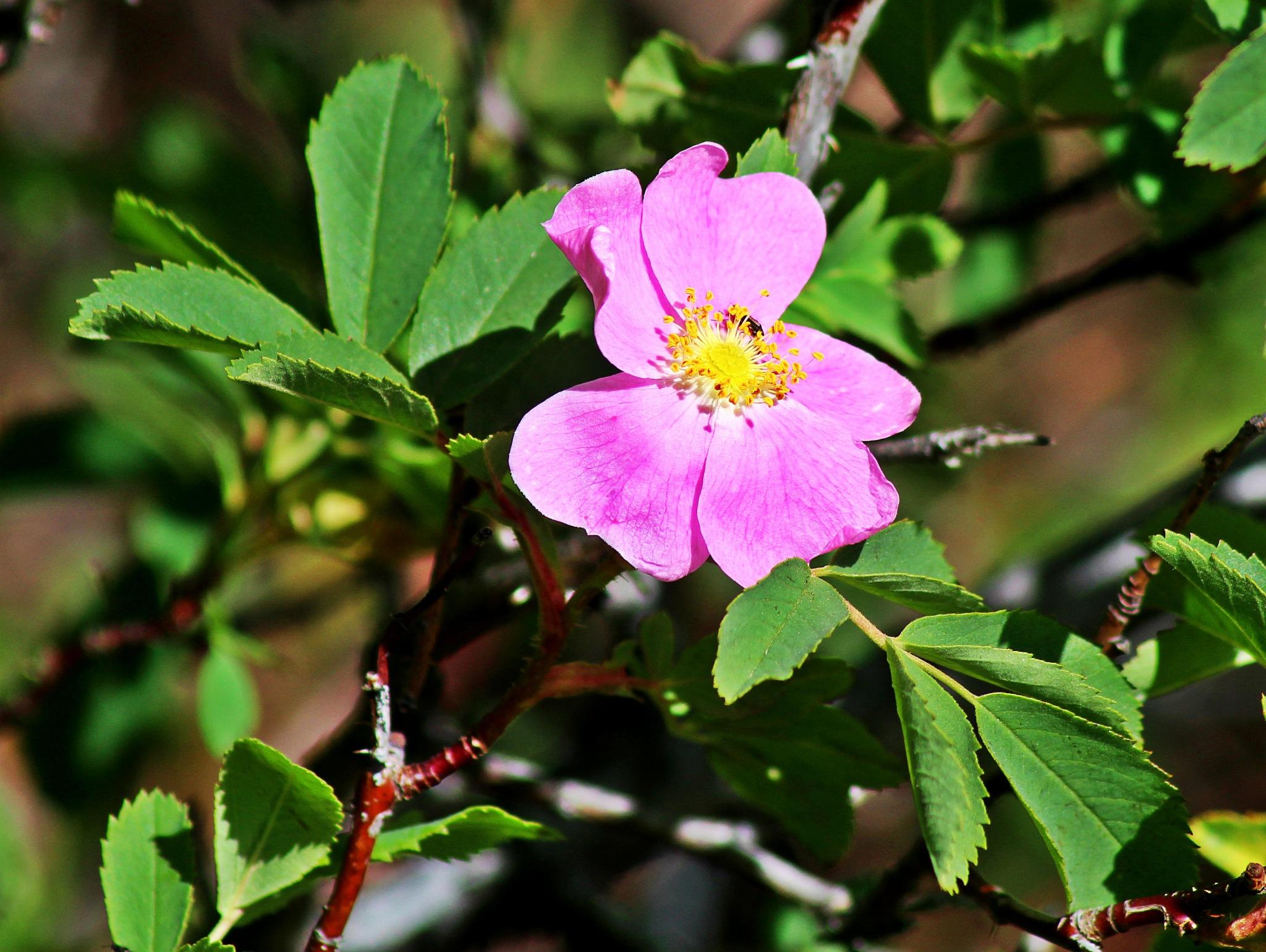 Dainty Purple Blooms by Lucretia Bittner