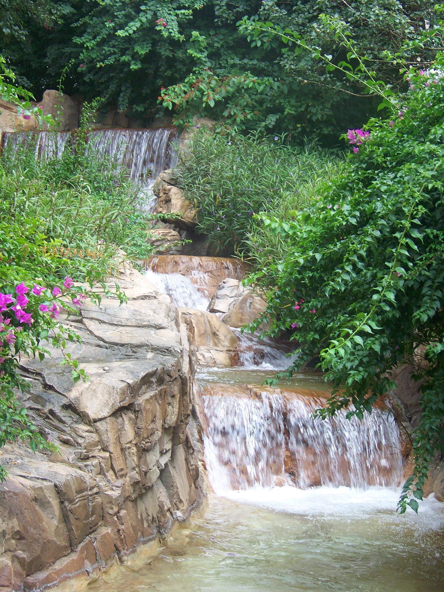 Photo in Landscape #water #rock #flowers #green