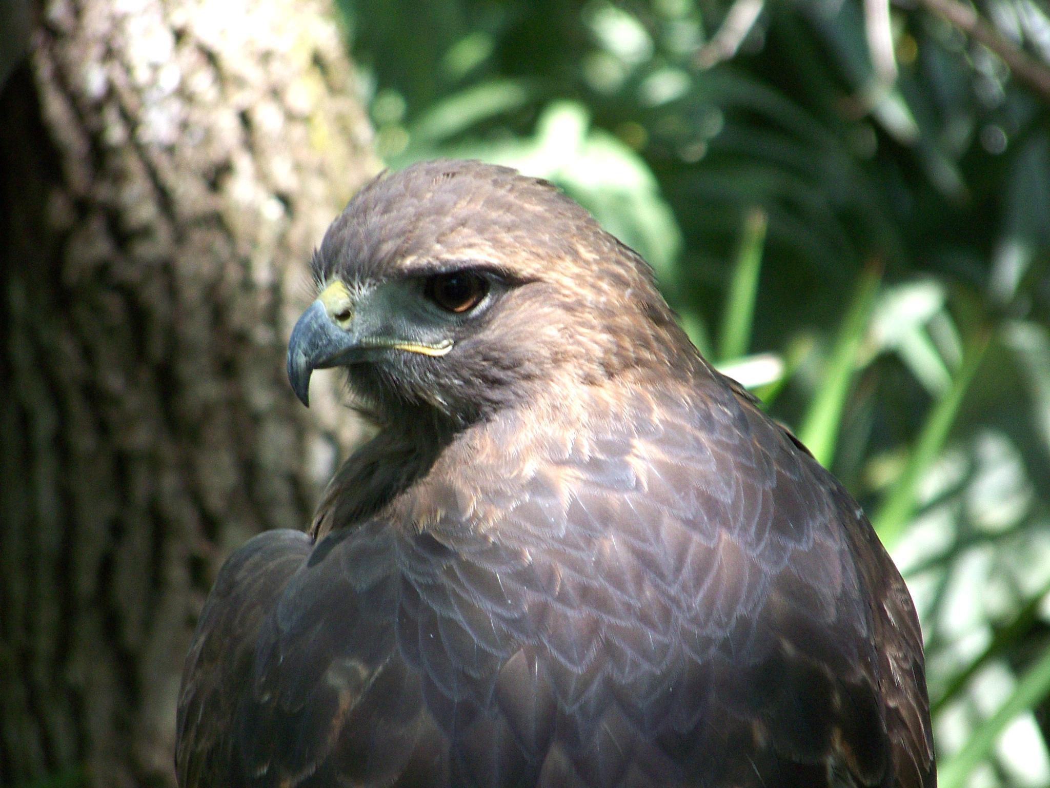 Photo in Animal #bird #eagle #flight