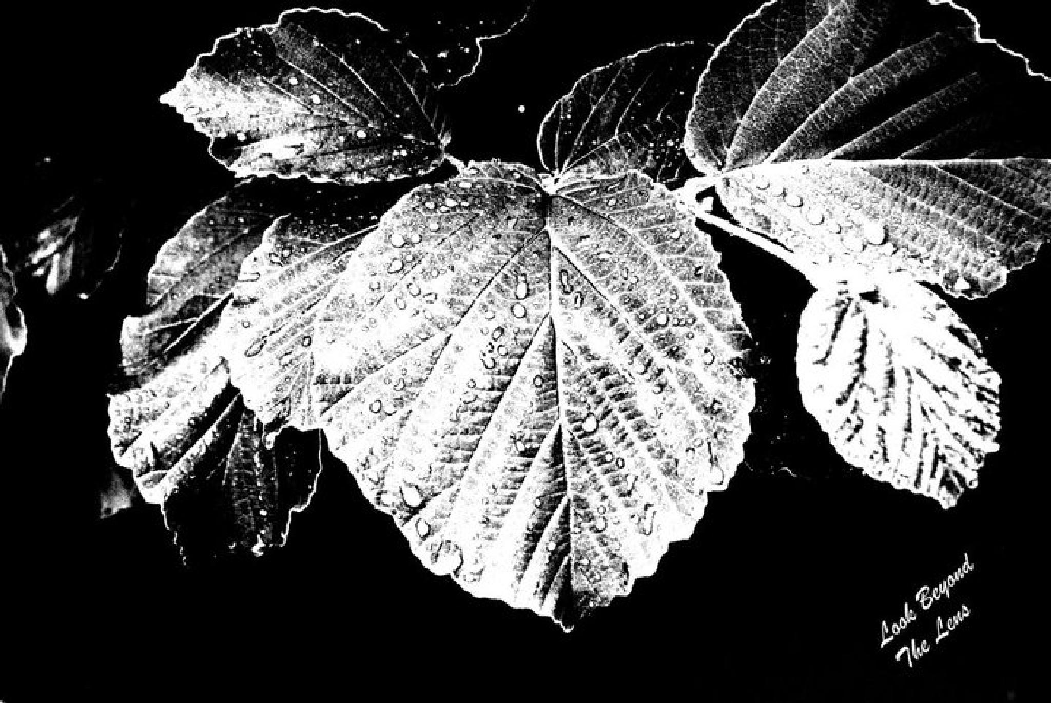 damp leaves by sunshinerjw1