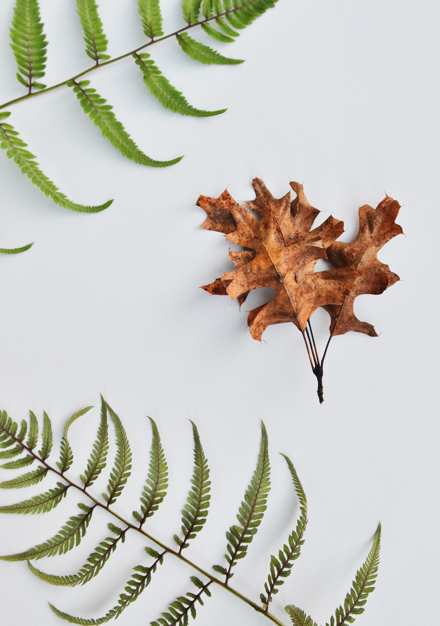 Photo in Still Life #leaf #leaves #oak