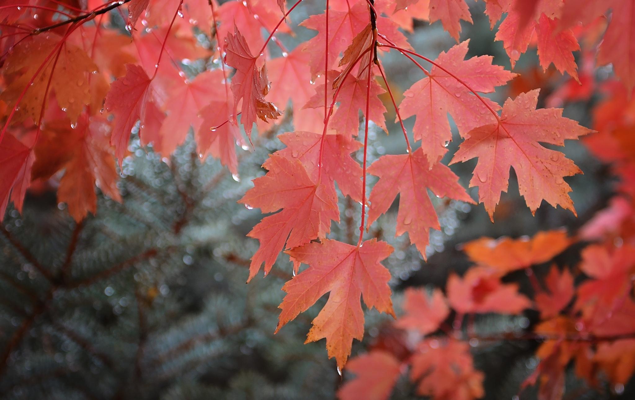 Fall Rain by gabrial
