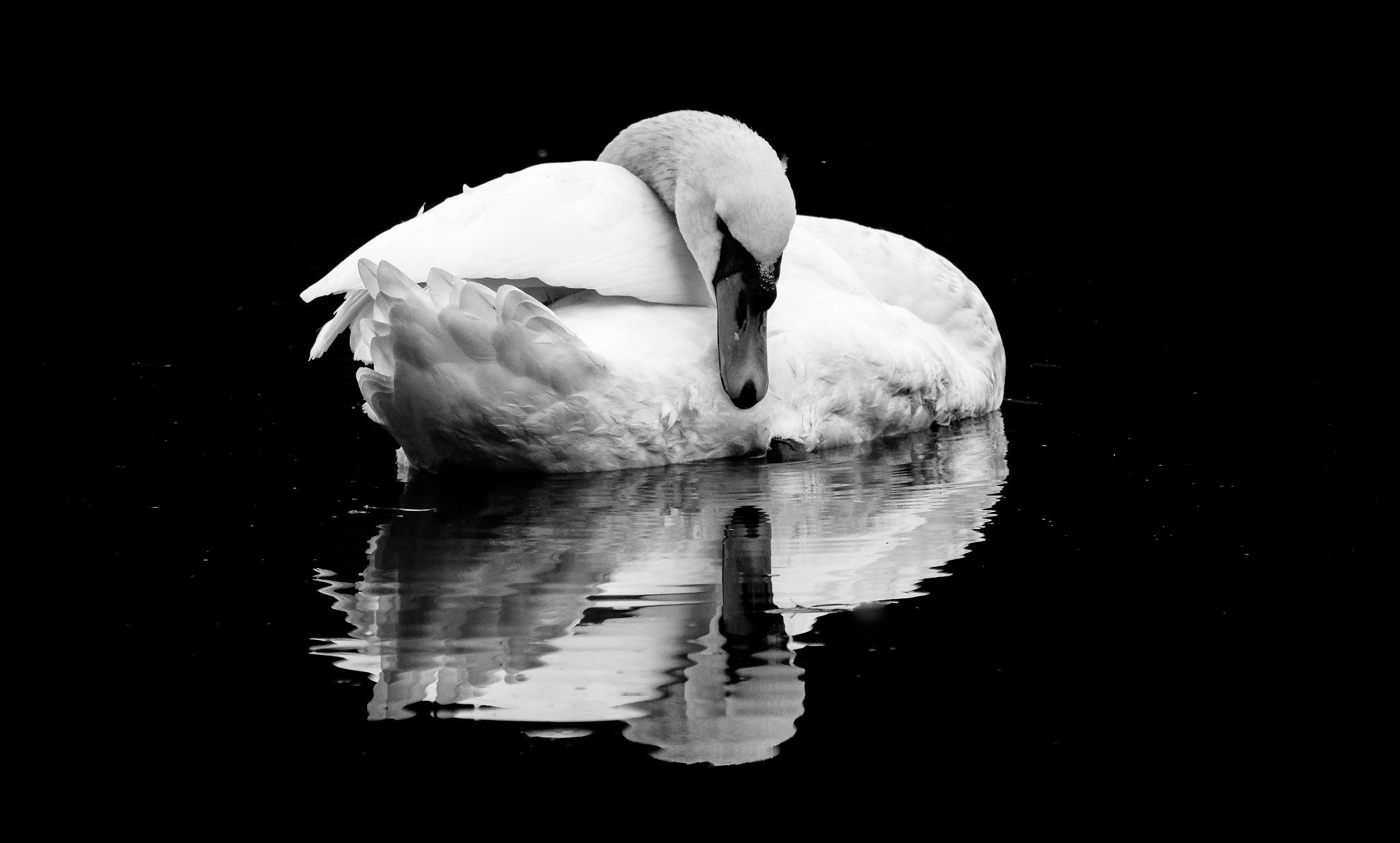 Reflecting by Maldo