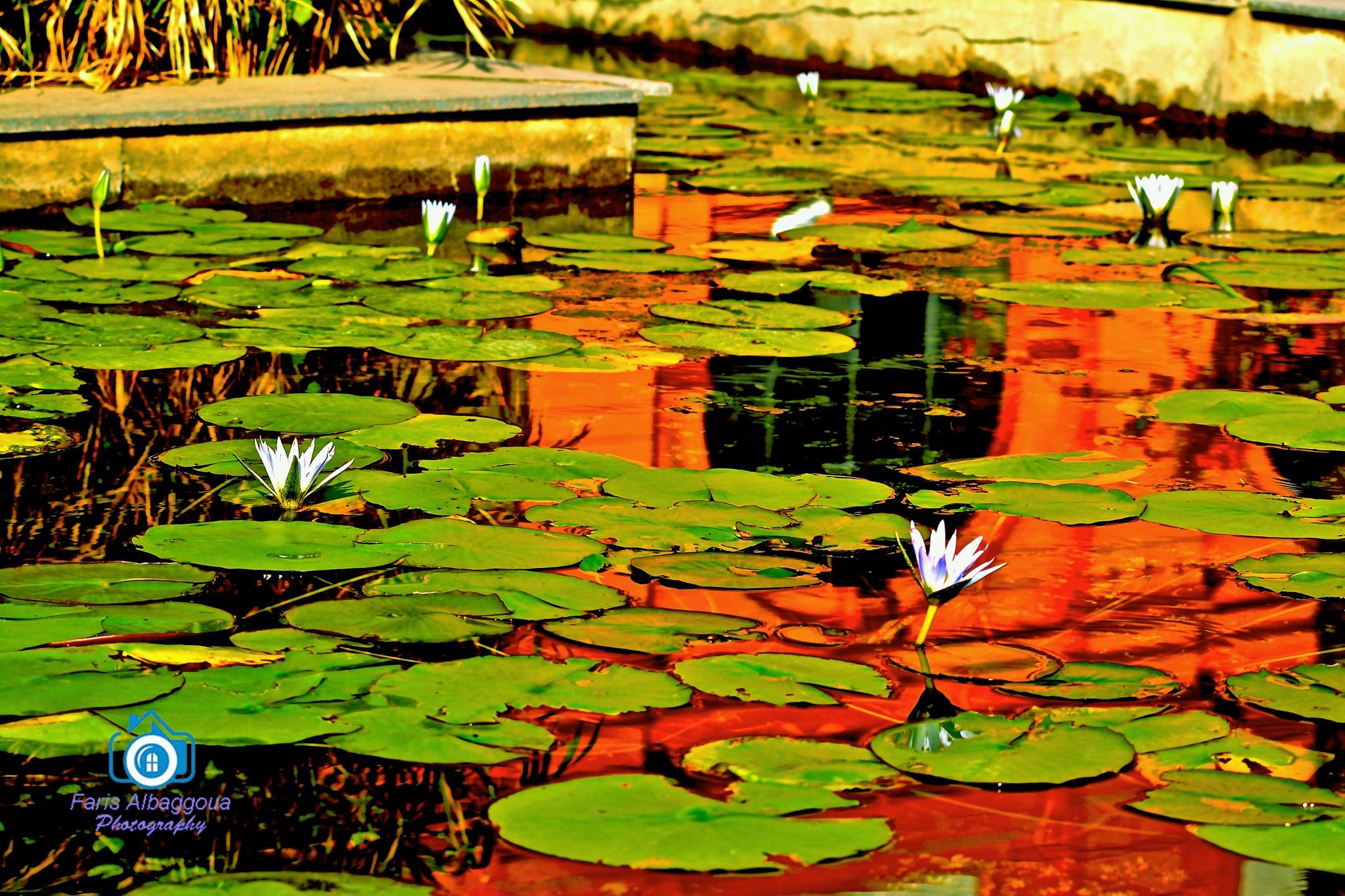 Lilies by bakooa