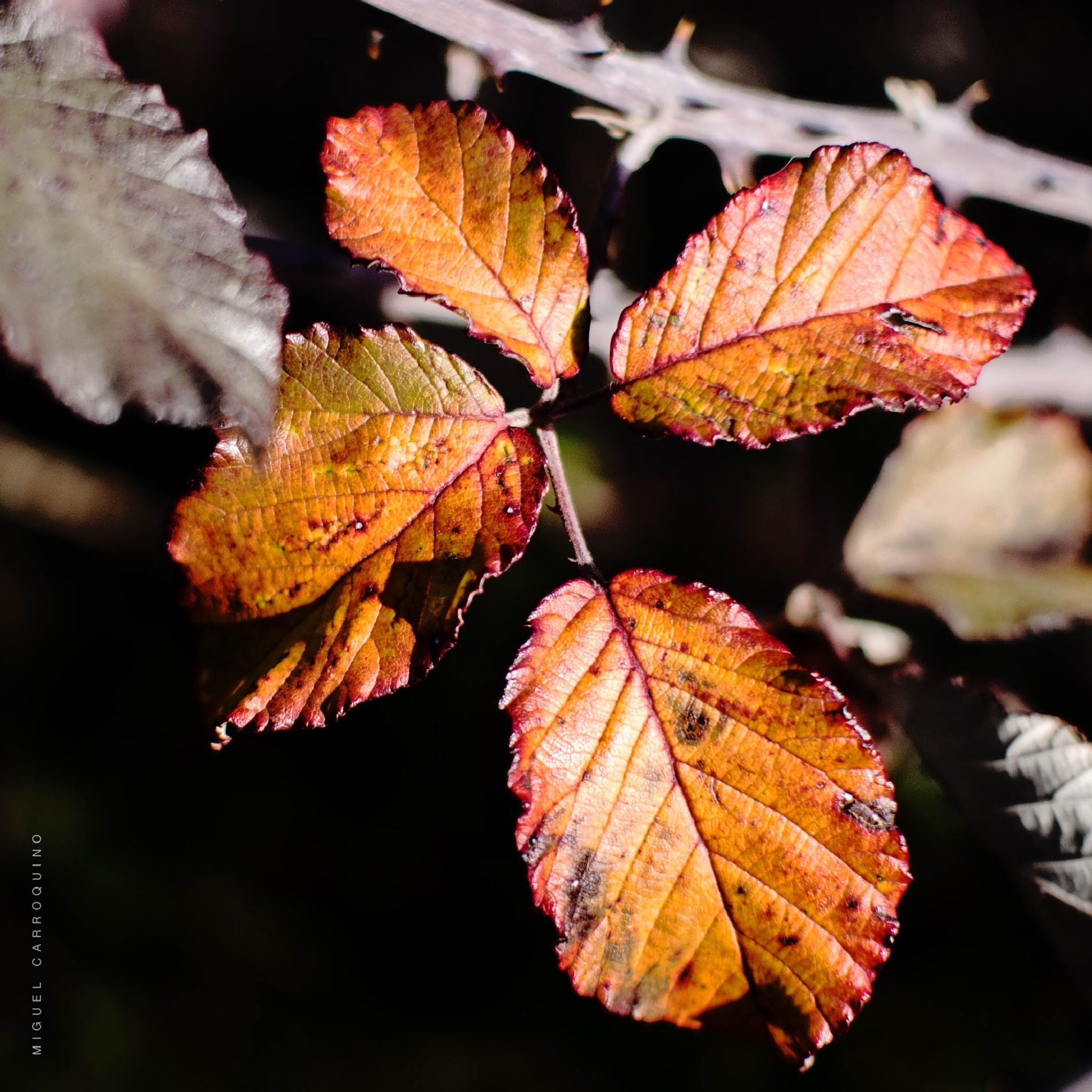 Leaves by mcarroquino