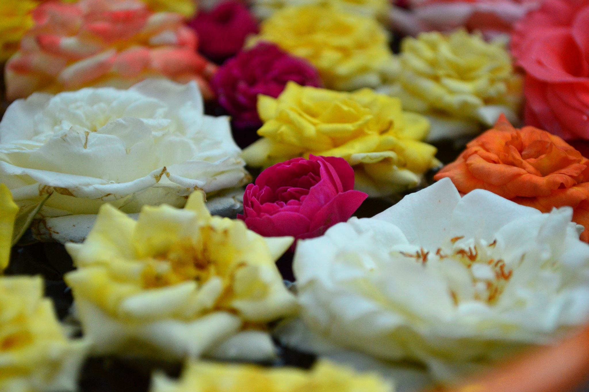 Flowers are the sweetest things God ever made and forgot to put a soul into - Henry Ward Beecher by Ramkumar Narayanan