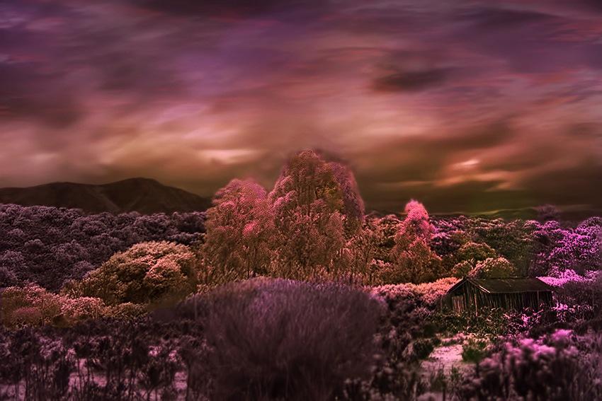 IR IMAGE by Renzo