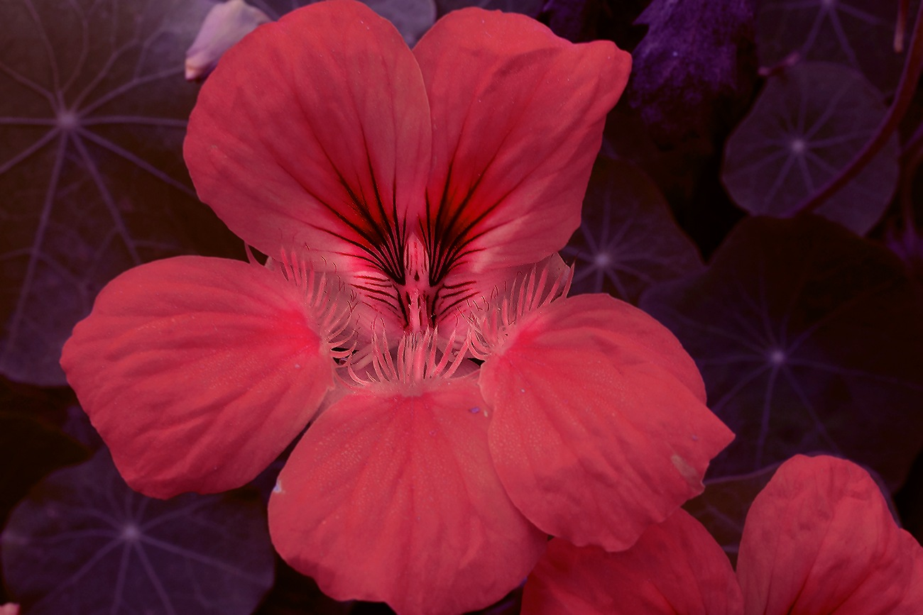 ANOTHER FLOWER by Renzo