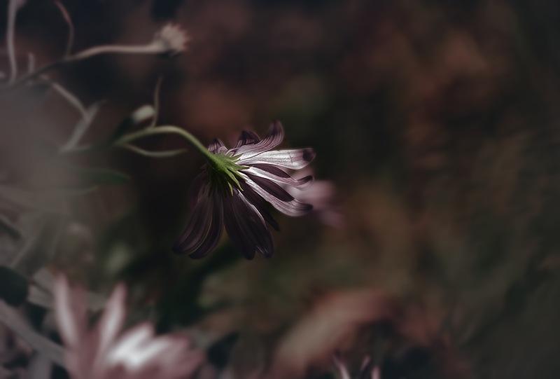 FLOWERS  by RenzoCermenati