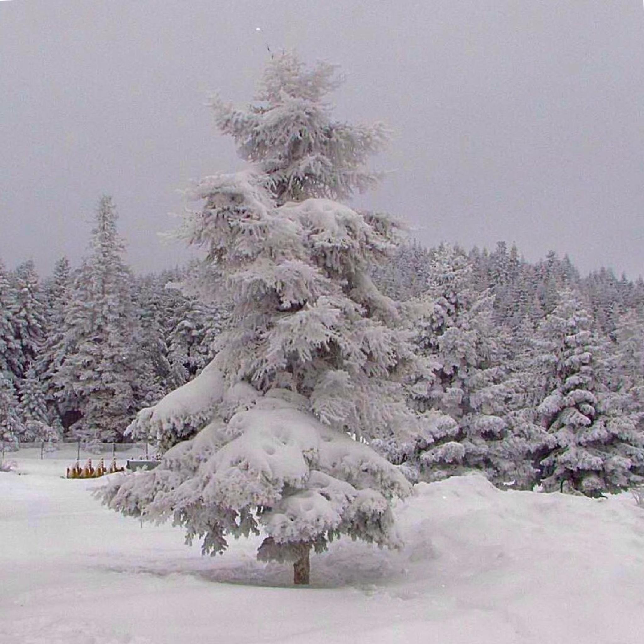 Winter  by nejatgencer