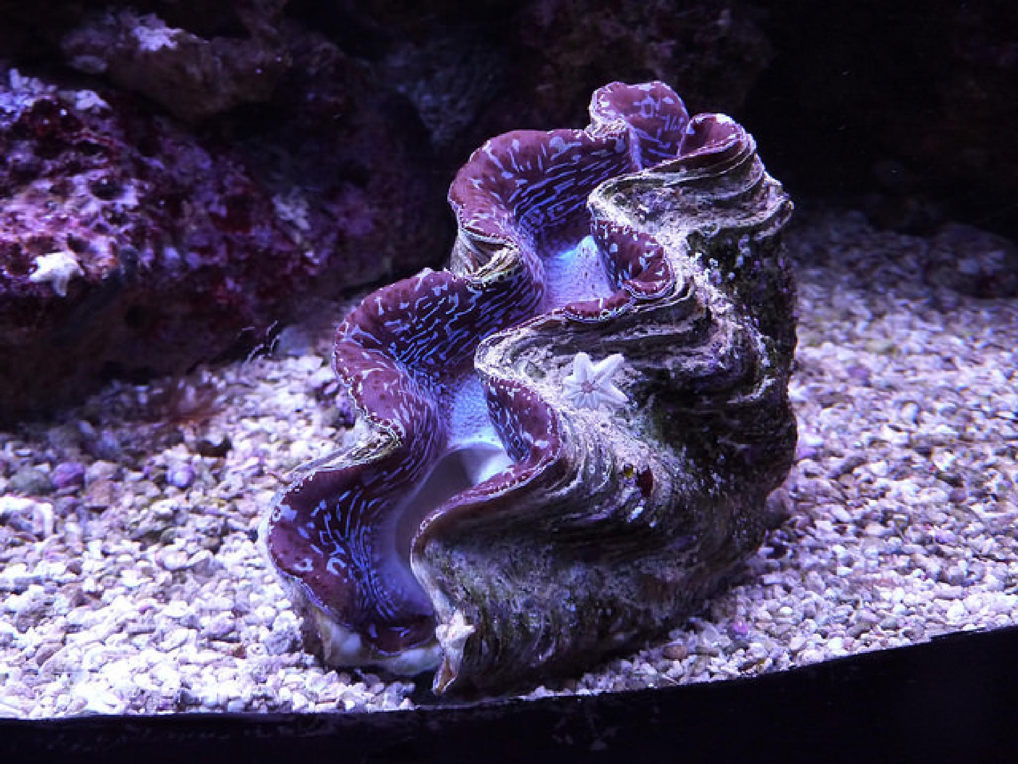 clam by Radek Smidt