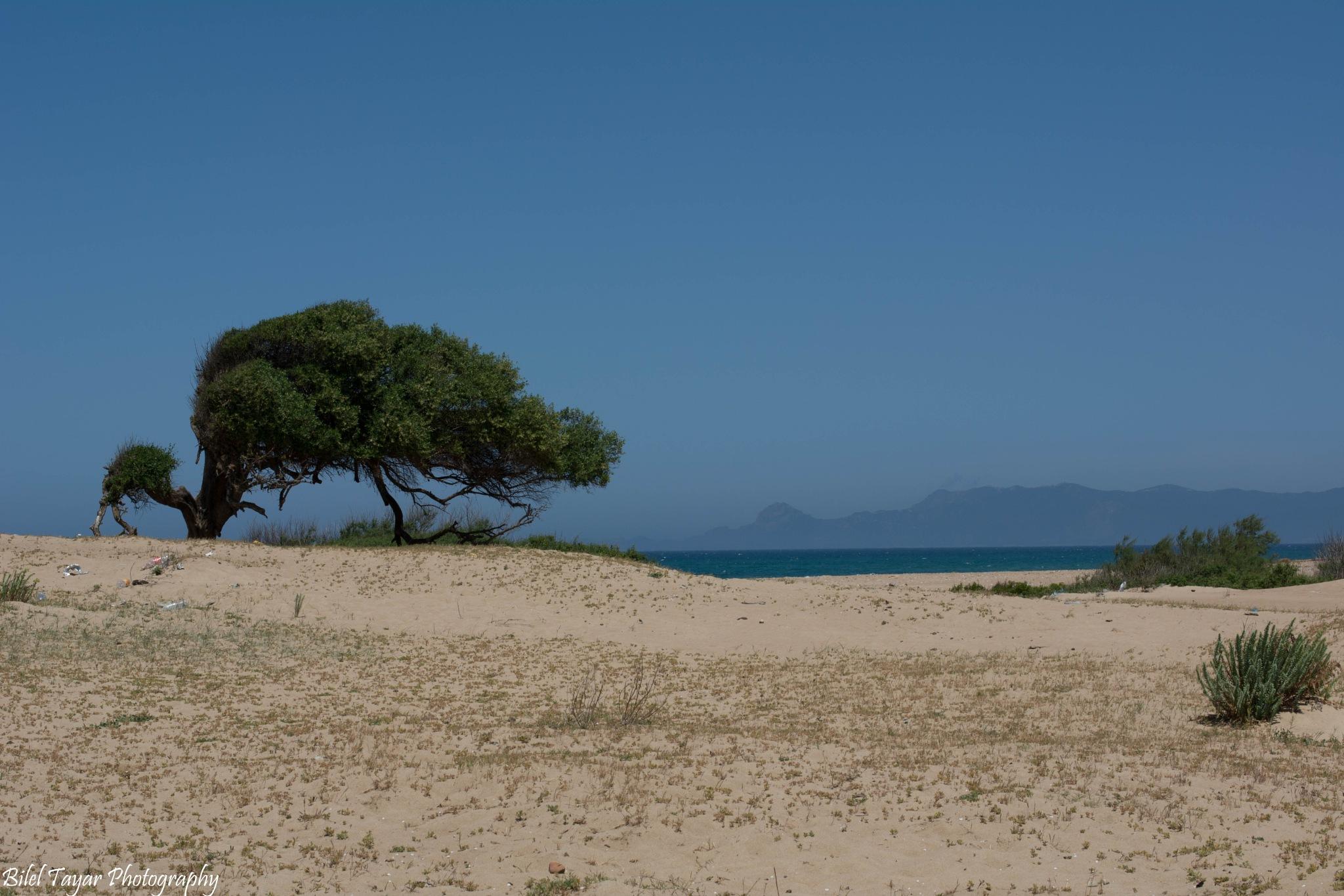 Guerbes tree by Bilel Tayar