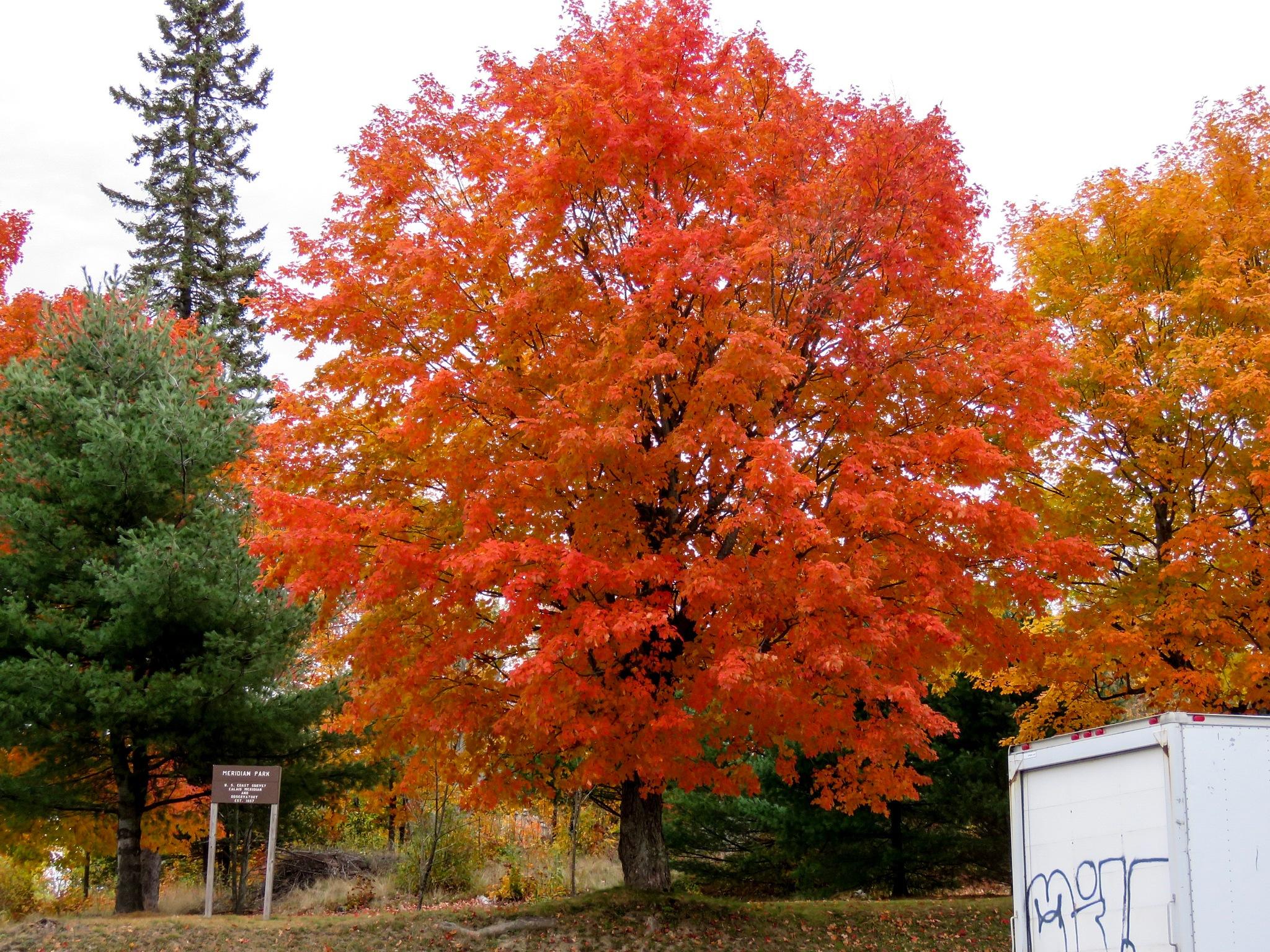 Fall  by Wacharaporn  (Sa) Hooper