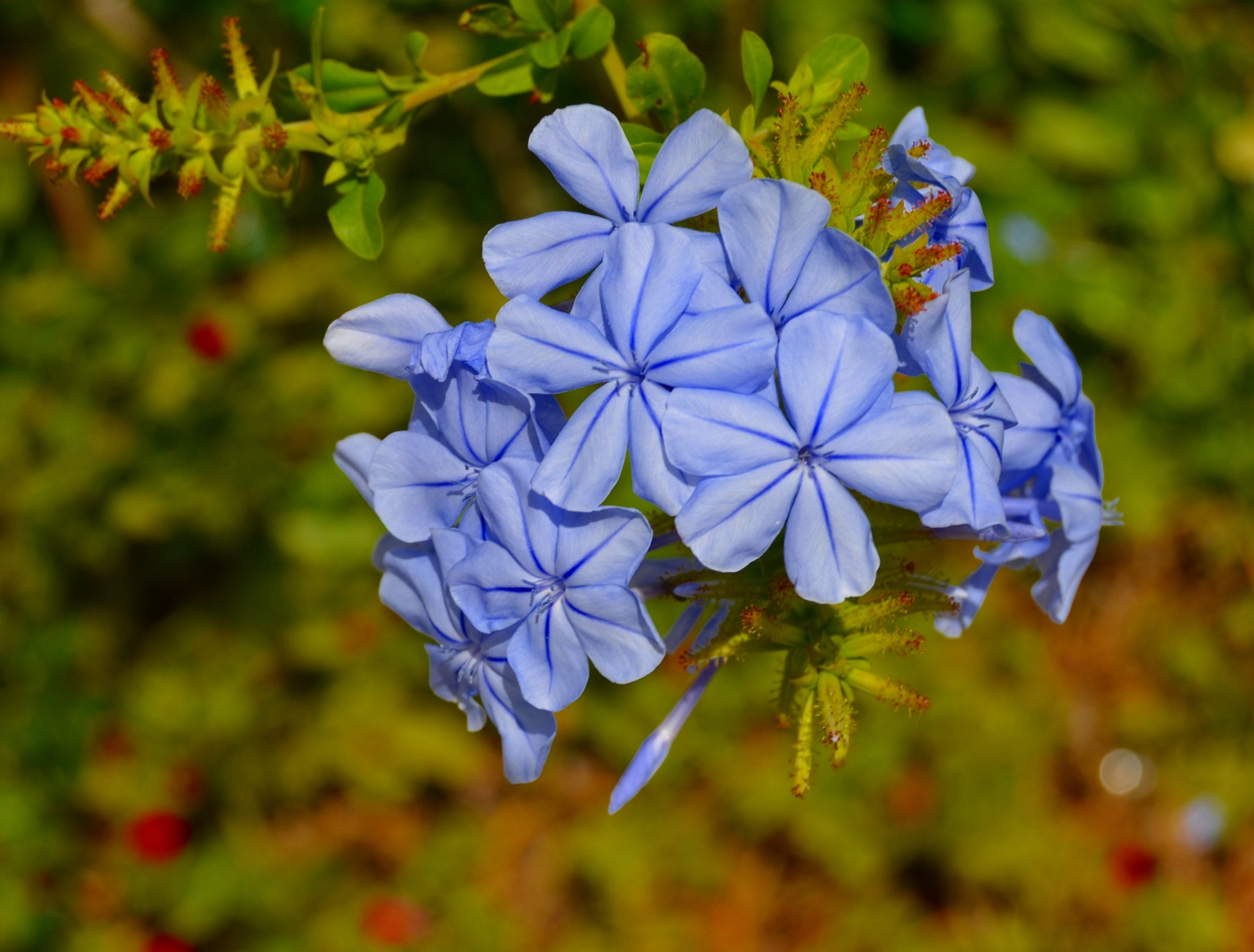 Photo in Nature #flowers #wild #blue