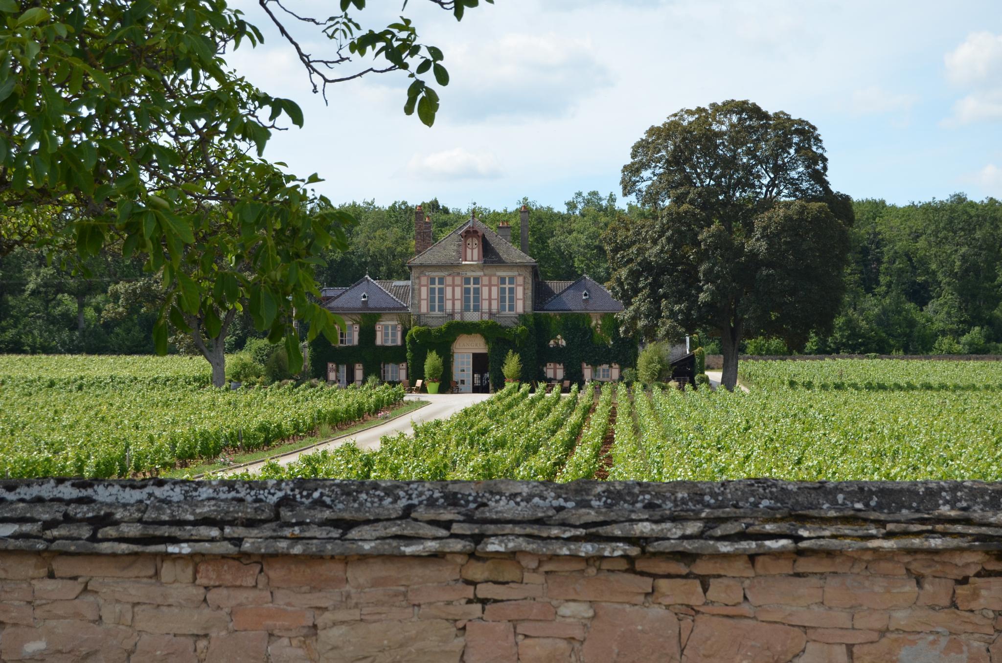 Vineyard by leo van den Broeck