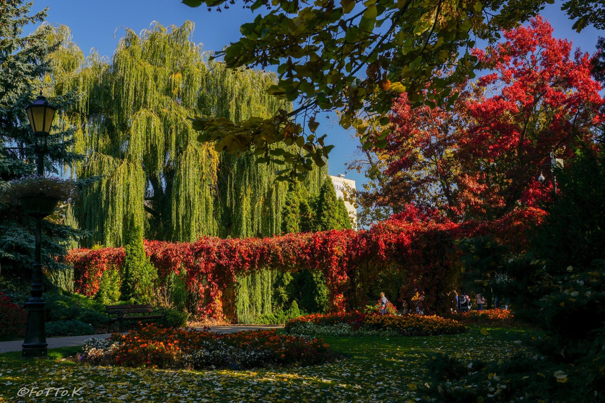 W ogrodzie botanicznym.... by Karol