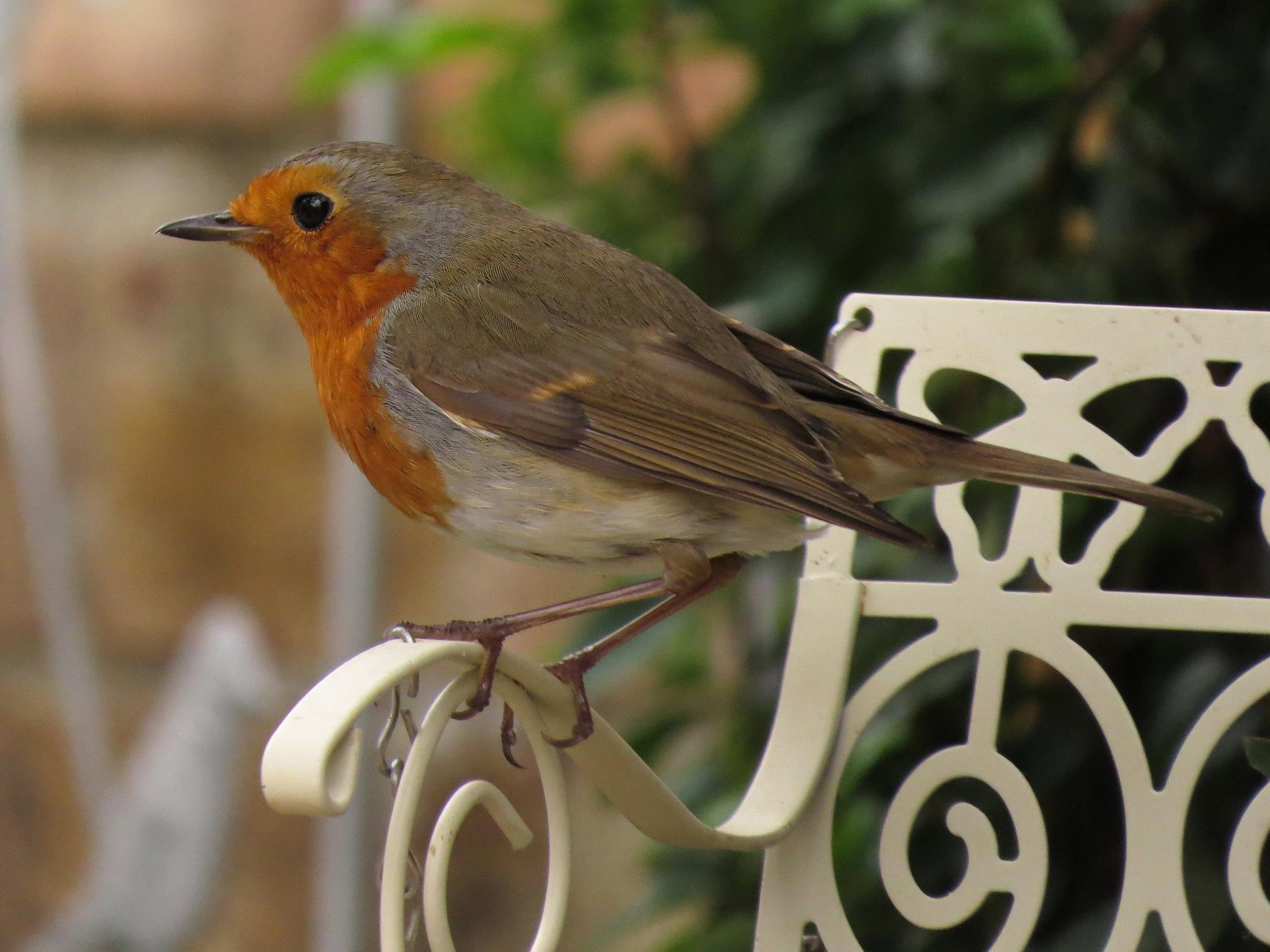 Robin by June