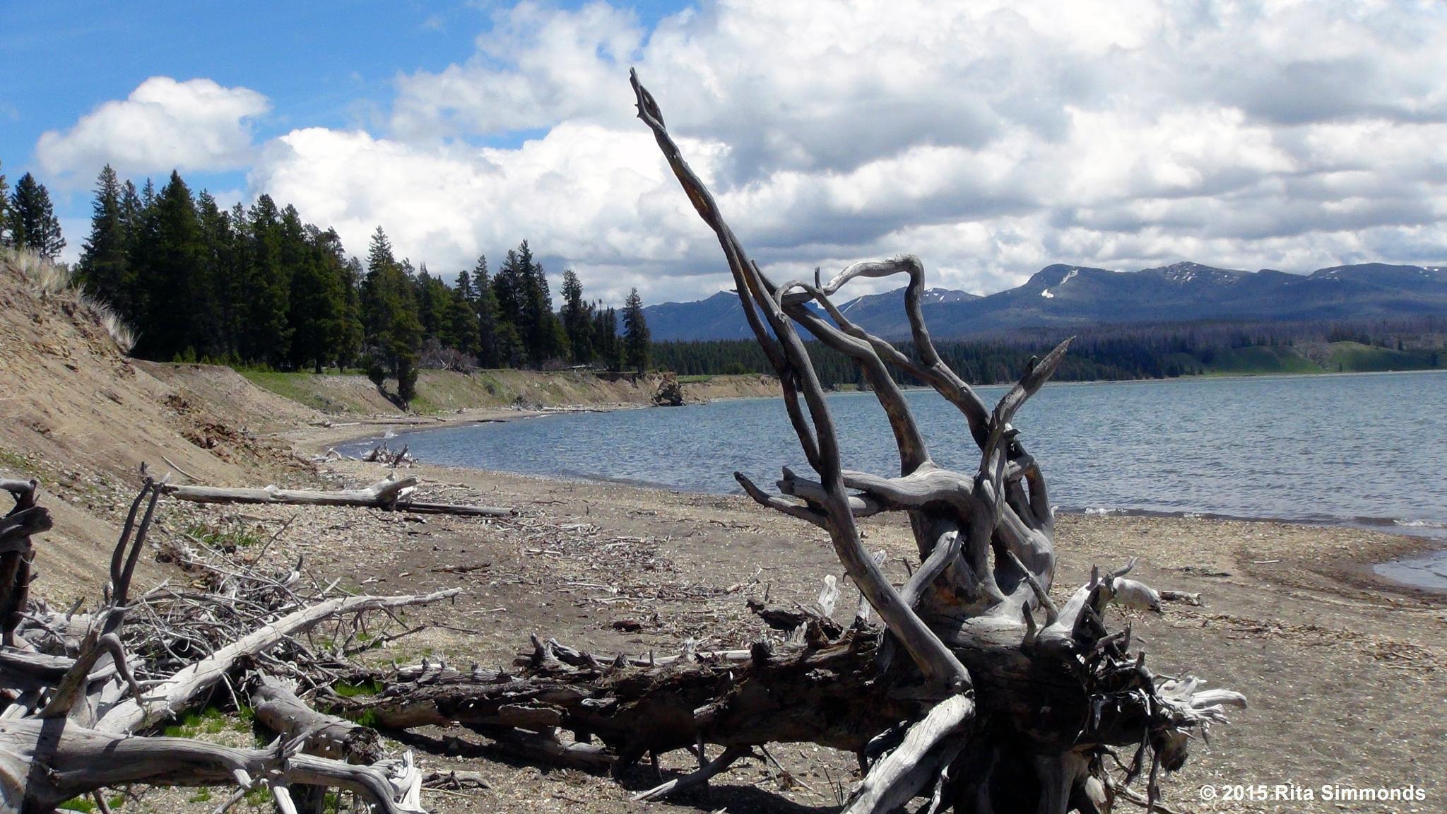Driftwood by Rita Simmonds