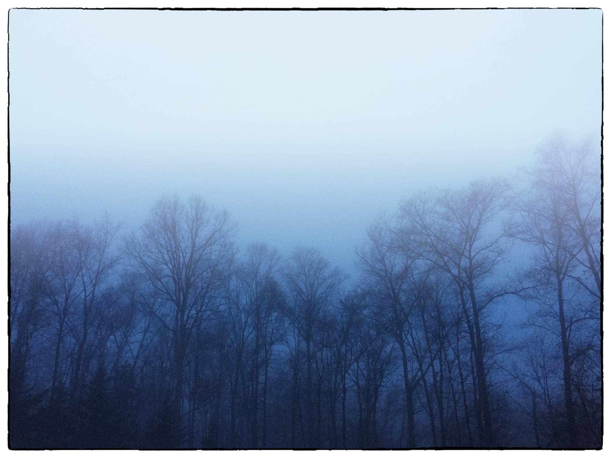 Morning fog by imagemaker