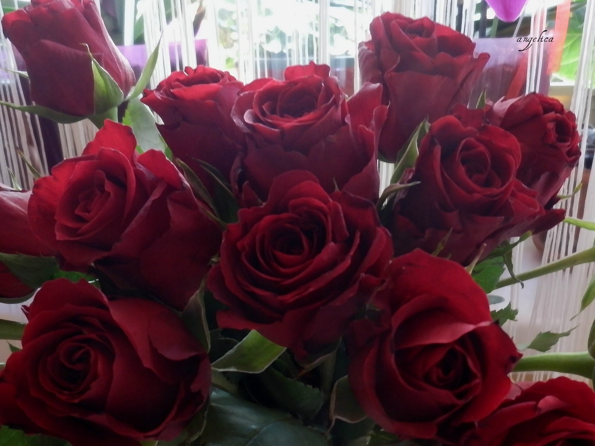 A bunch of cherry coloured roses.. by Angelica