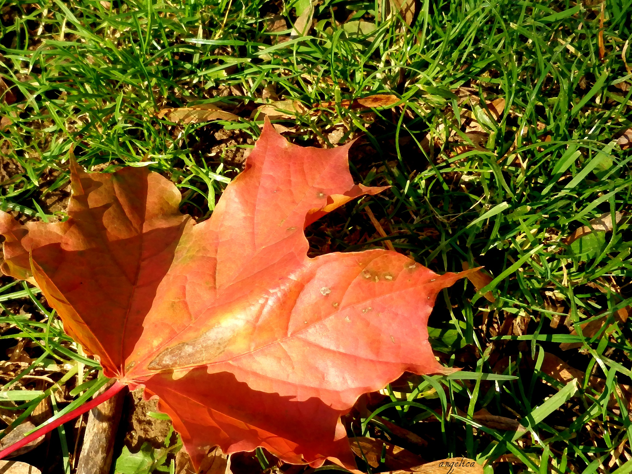 """""""No spring nor summer's beauty hath such grace/ As I have seen in one Autumnal face!"""" John Donne.  by Angelica"""
