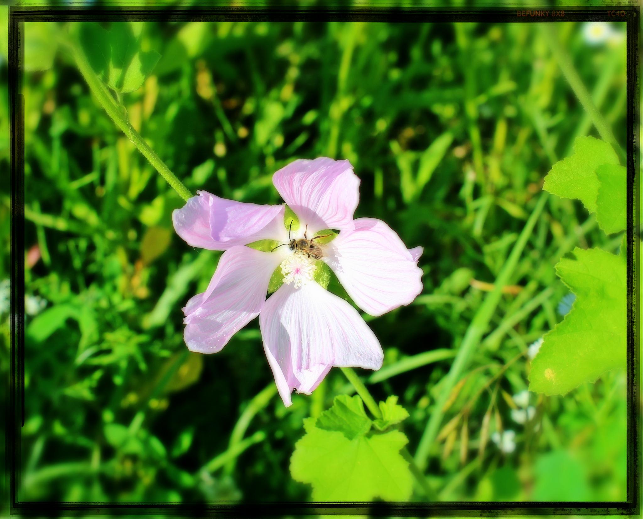 Framed flower.. by Angelica