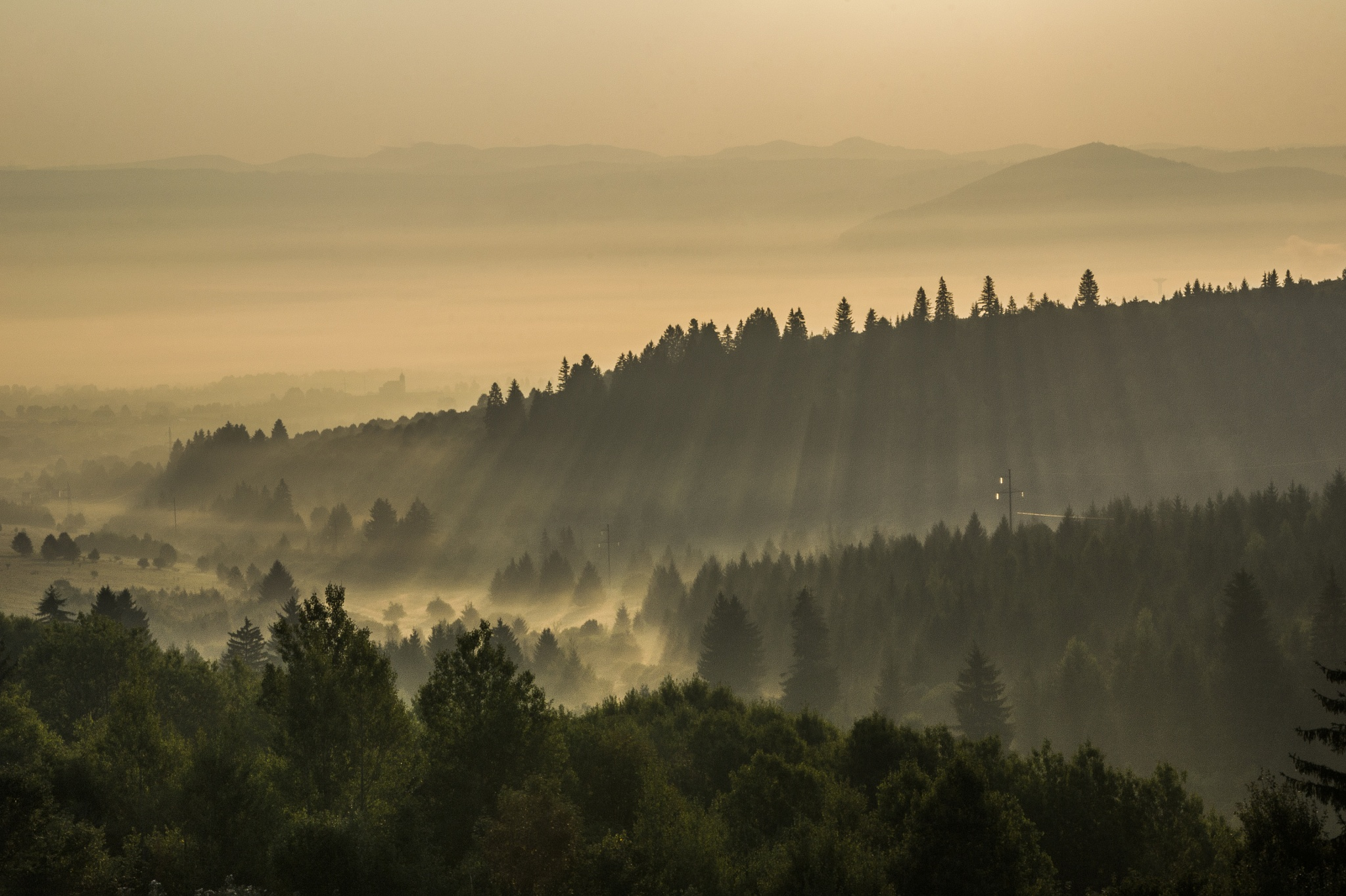 Foggy sunrise over the wood by hdotyi