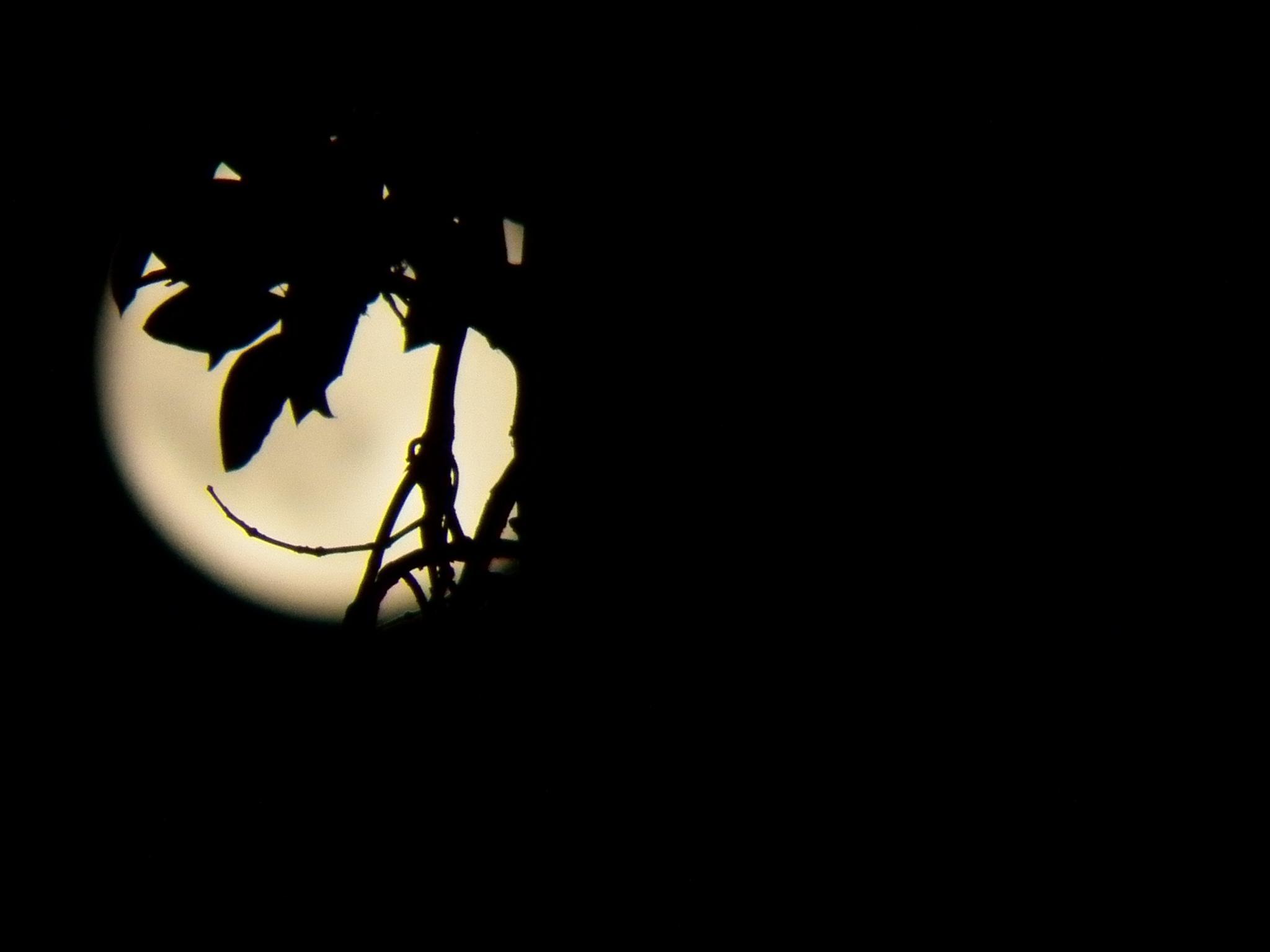 Lunar smiles by Tracie