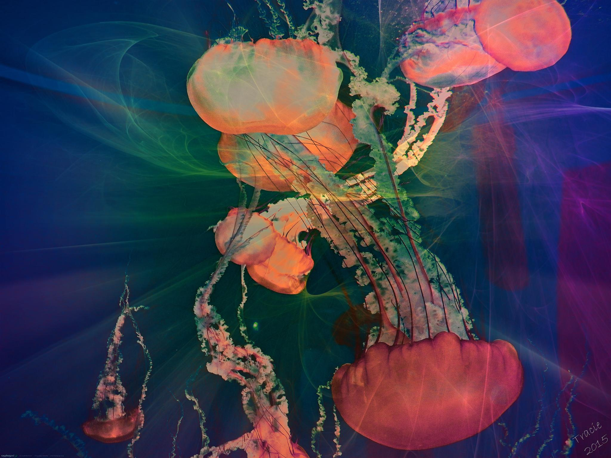 Photo in Sea and Sand #jellies #water #aquarium #awesome #swim