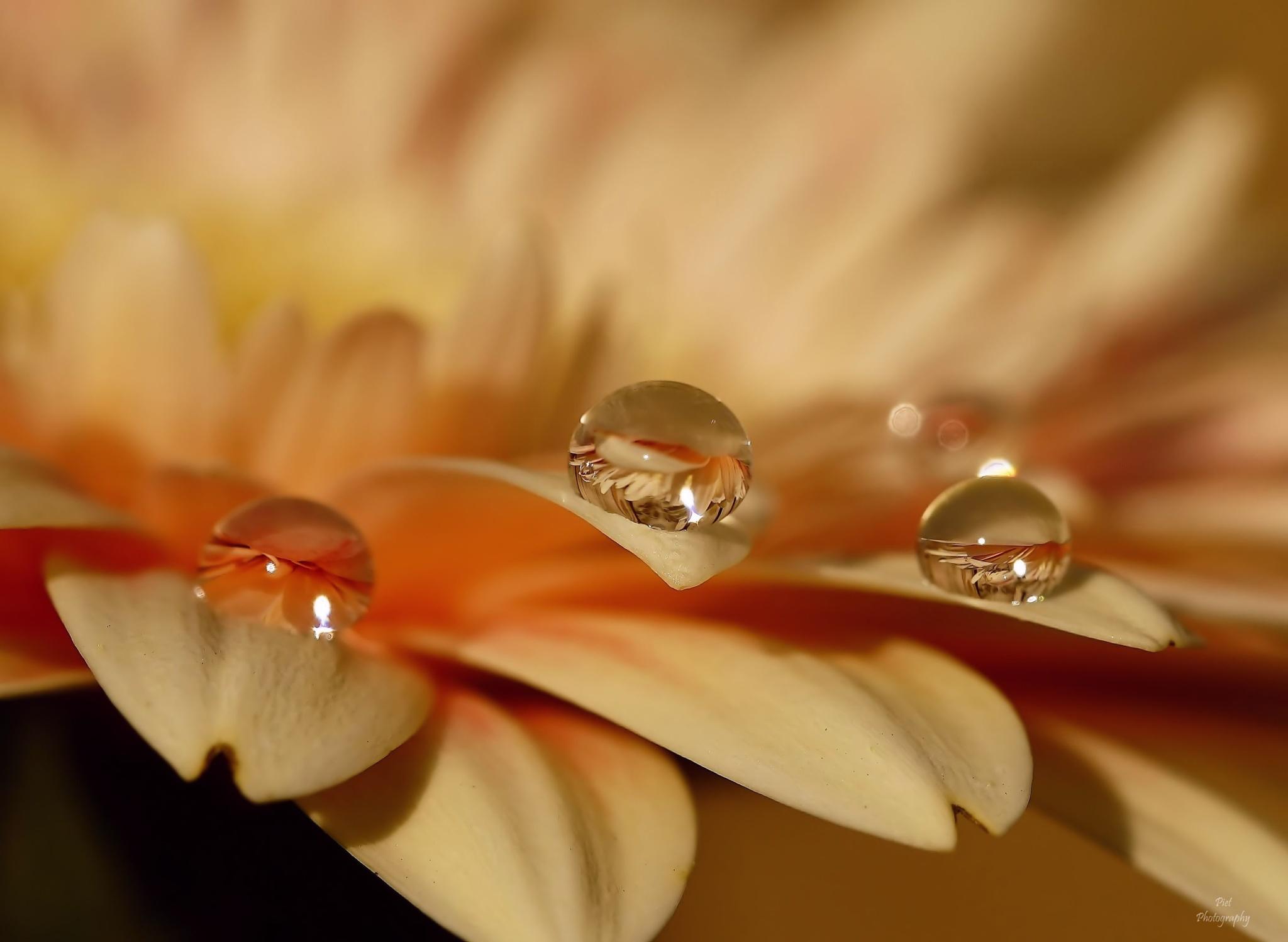 Drops... by PWaardenburg