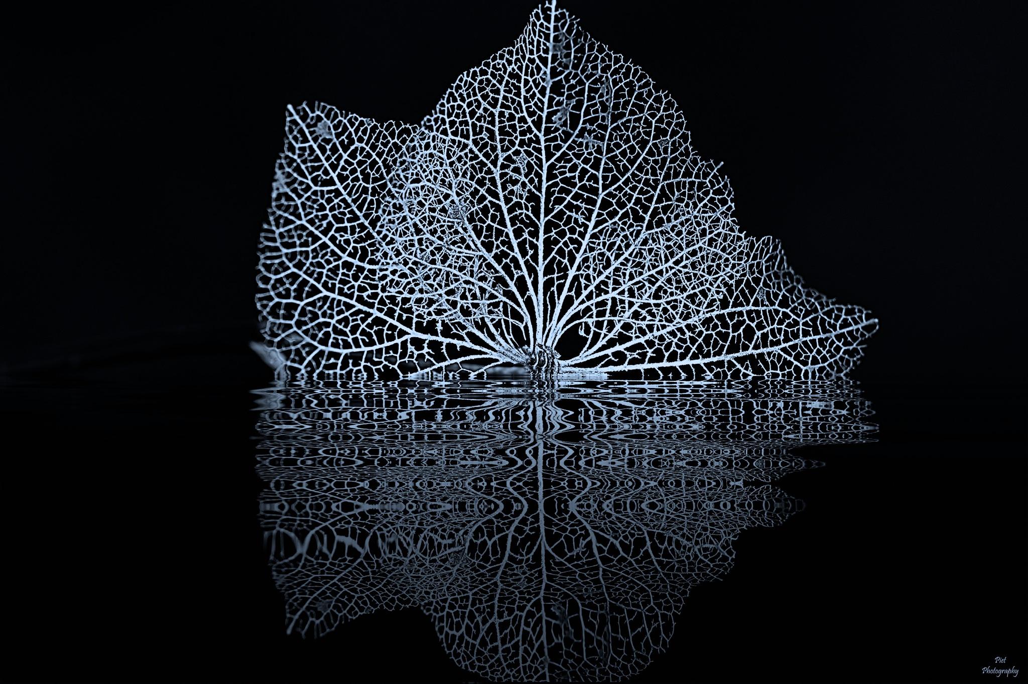 Reflection.... by PWaardenburg