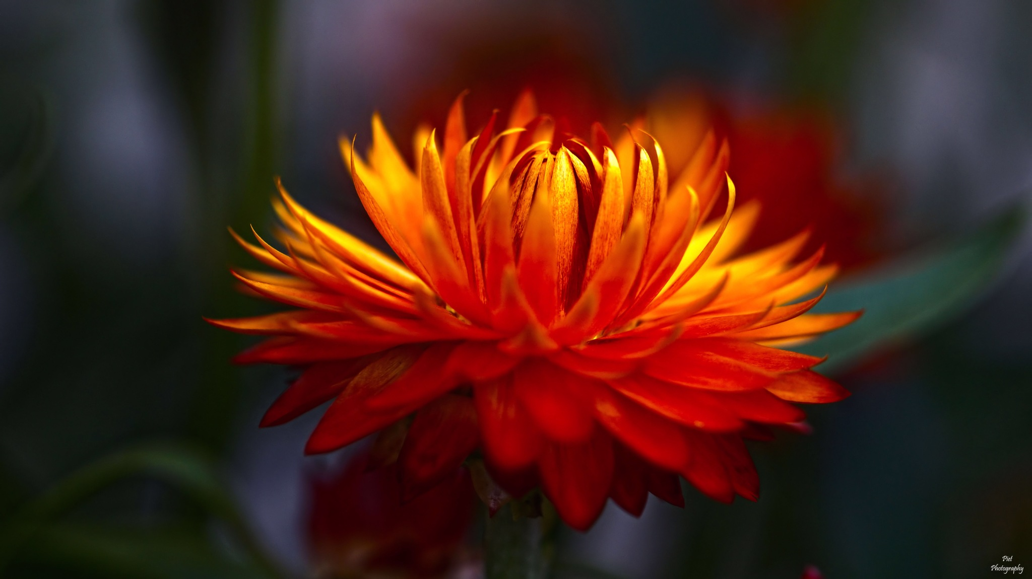 Power Flower... by PWaardenburg