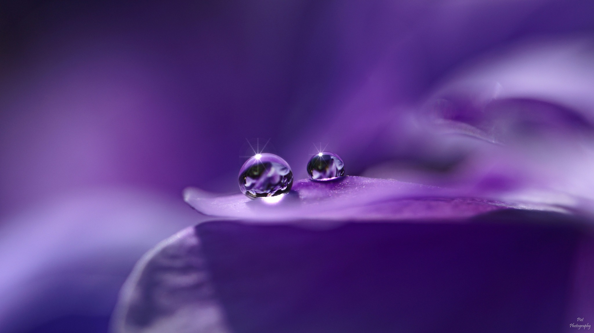 Magic World of Droplets..... by PWaardenburg