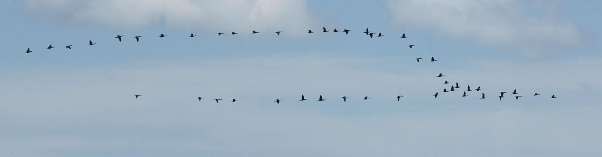 Birds by Kristof Z.
