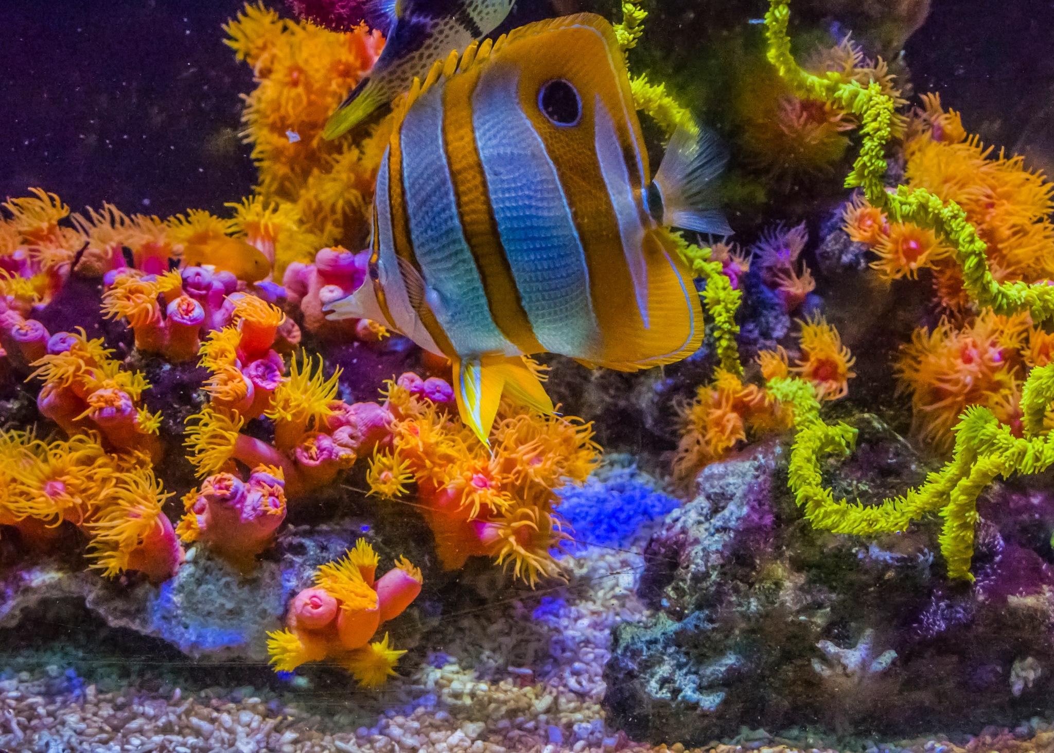 Disguised as Nemo by djaffar adane