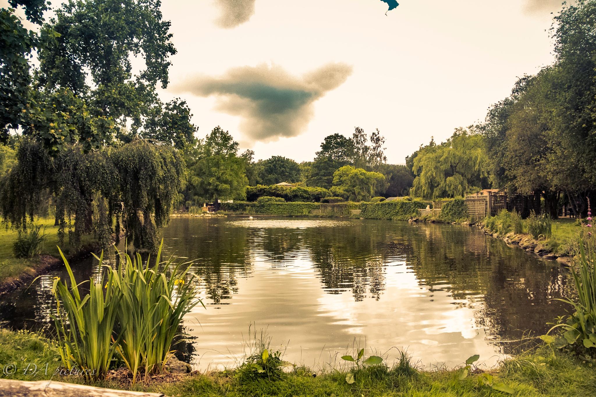 Pond by djaffar adane