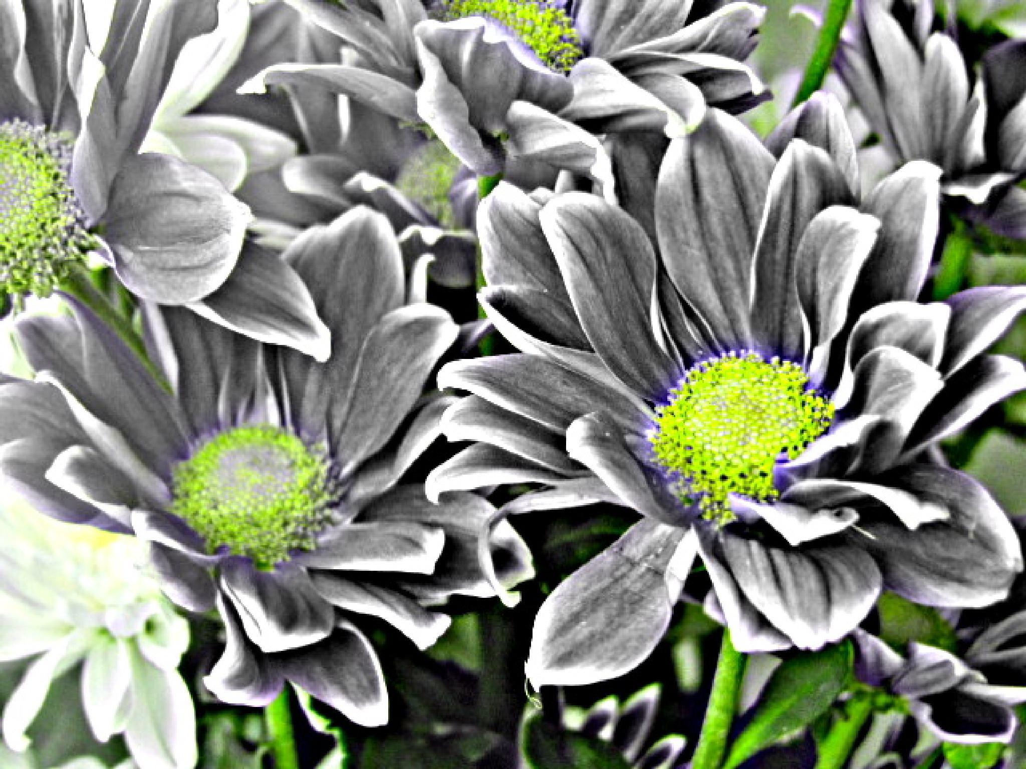 Blackandwhite by sarah2608