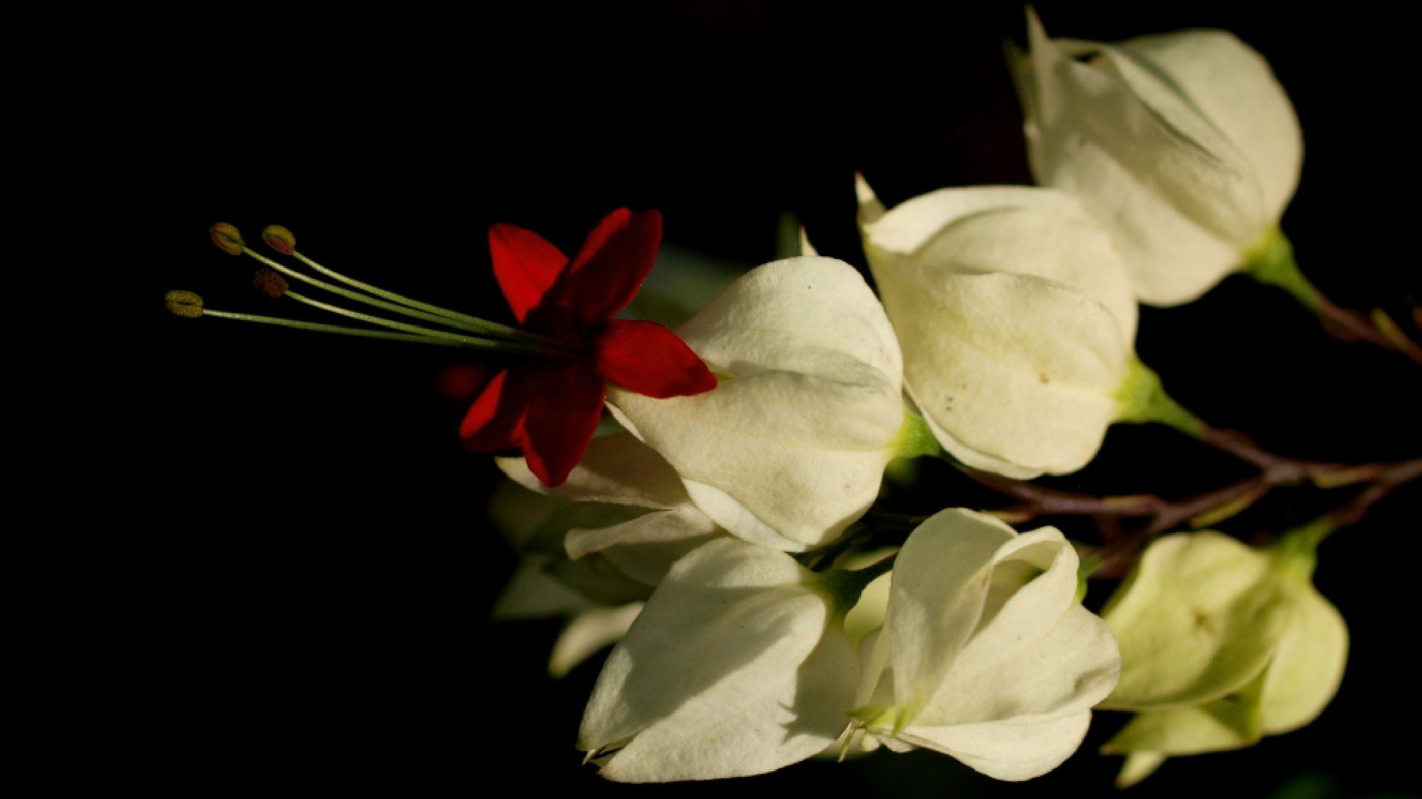 Merak flowers by ariestrialfandie