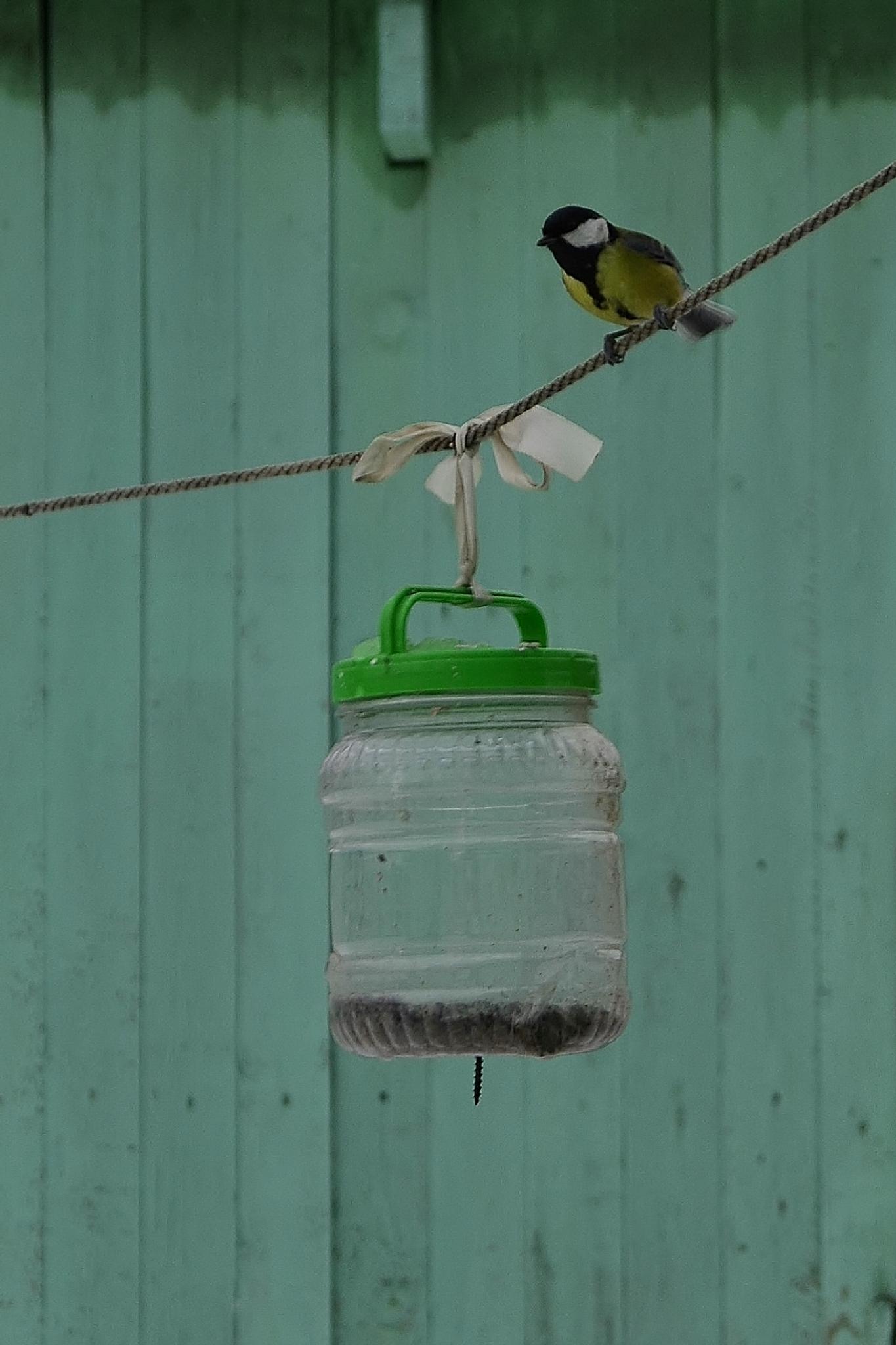 Bird by Anastasiya Tarasova