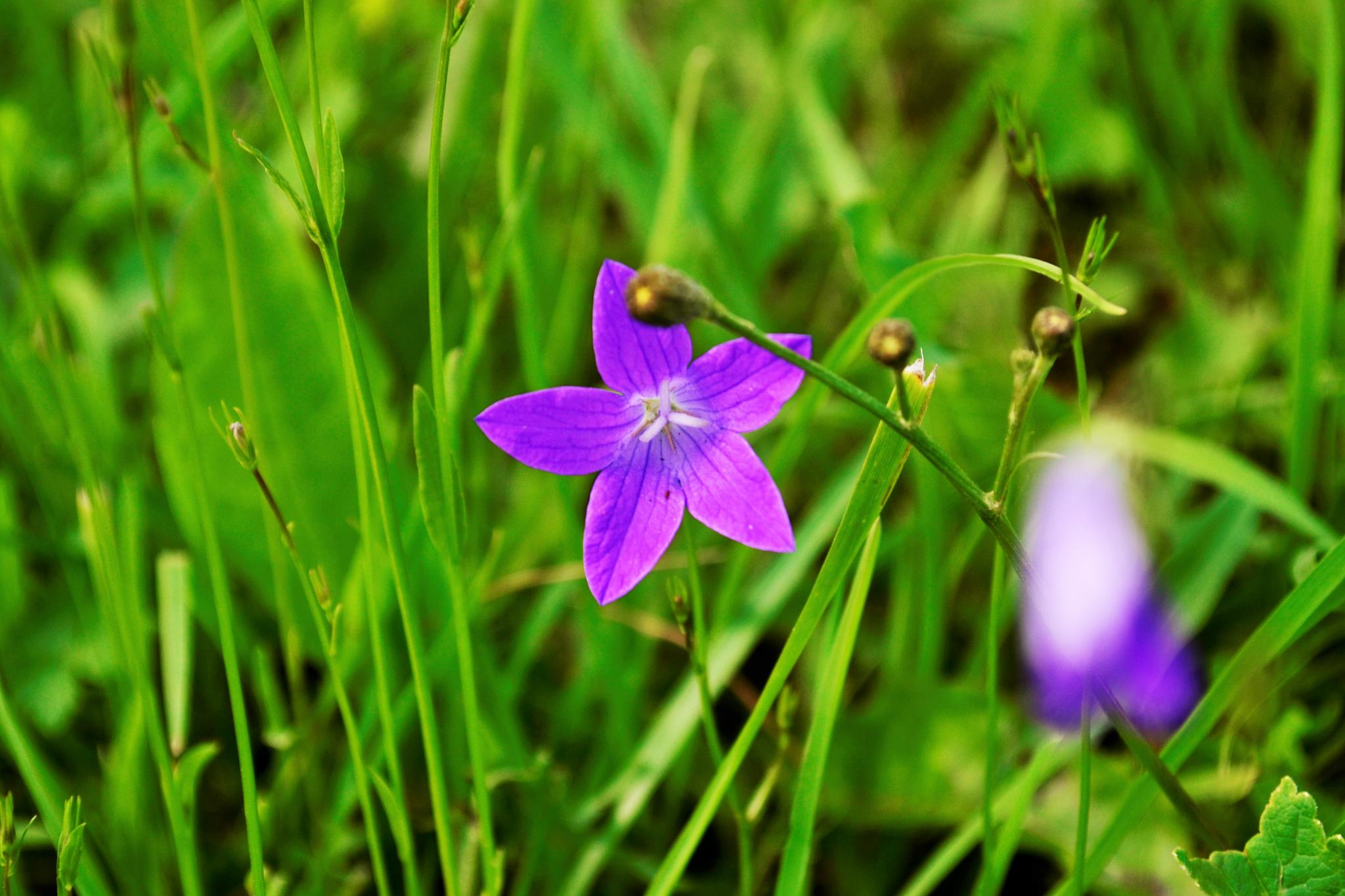 Photo in Nature #flower #summer #nature #color