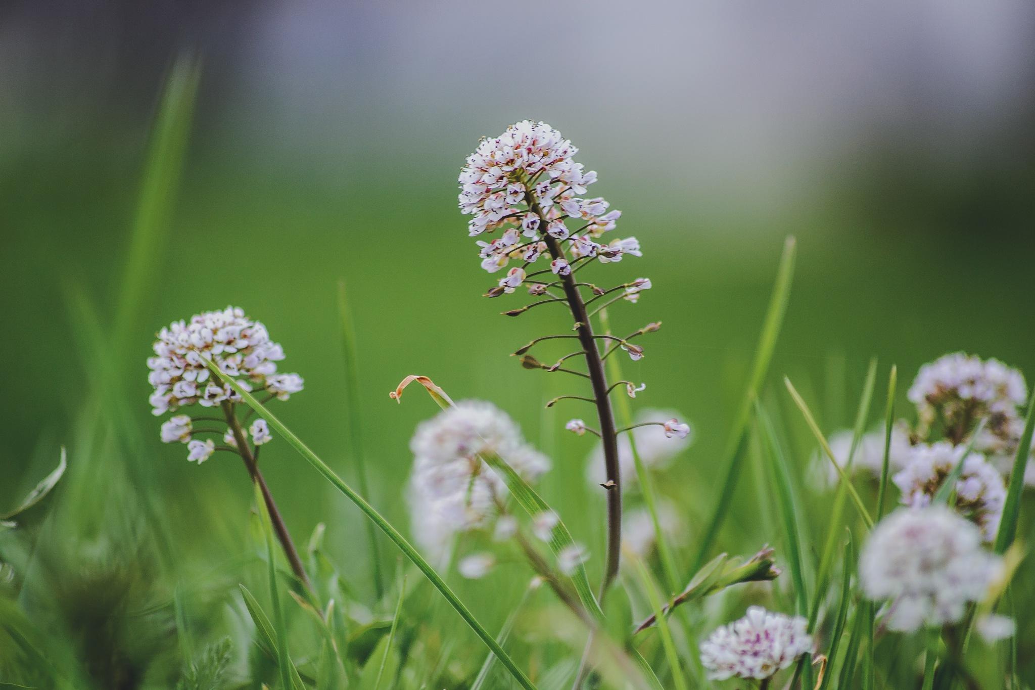 Flowers by Anastasiya Tarasova
