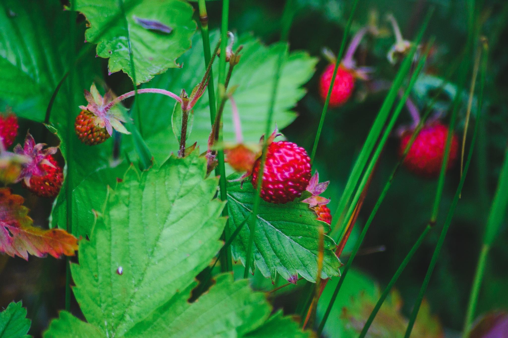 strawberry by Anastasiya Tarasova