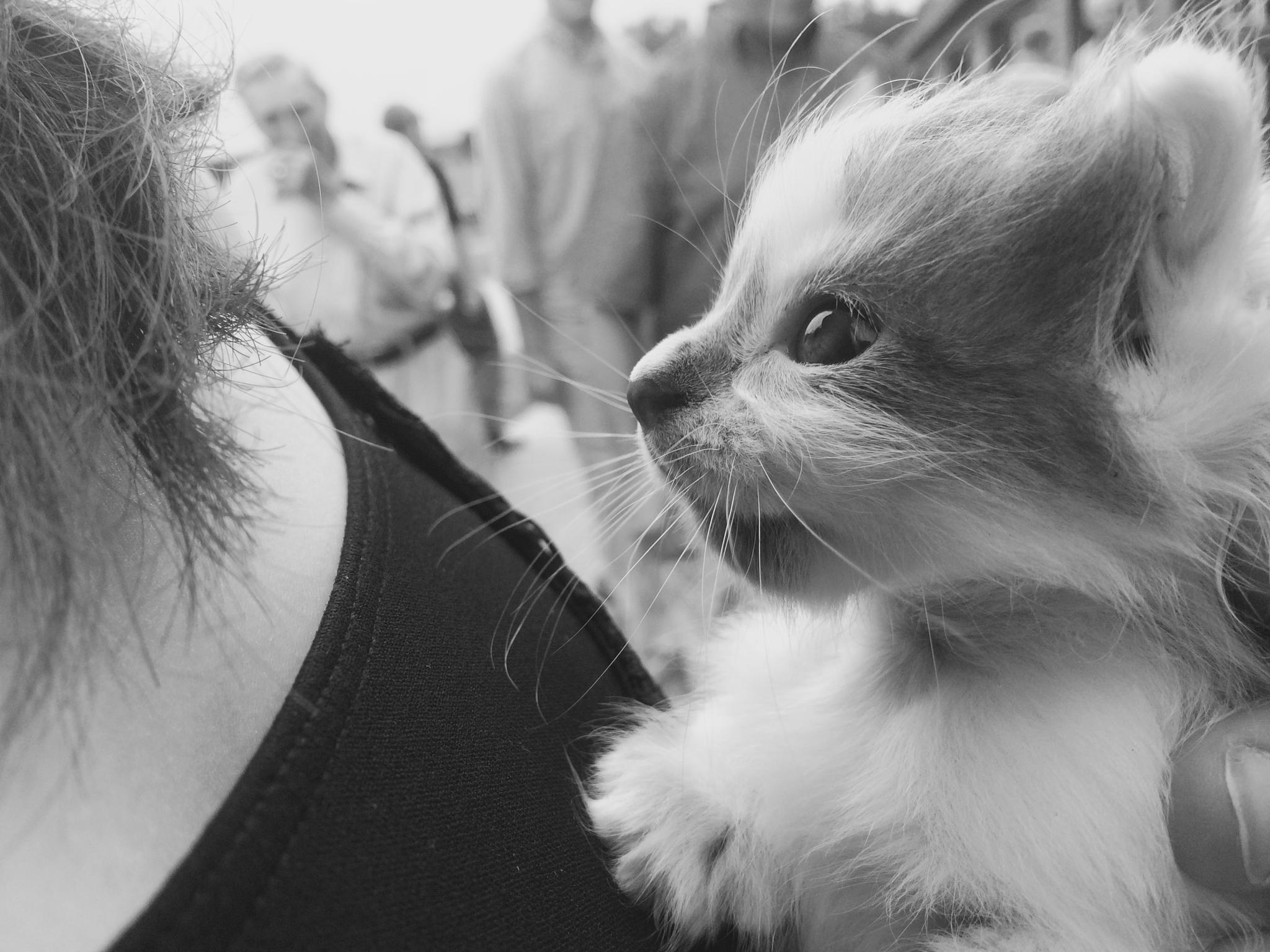 Kitten by Sophie S