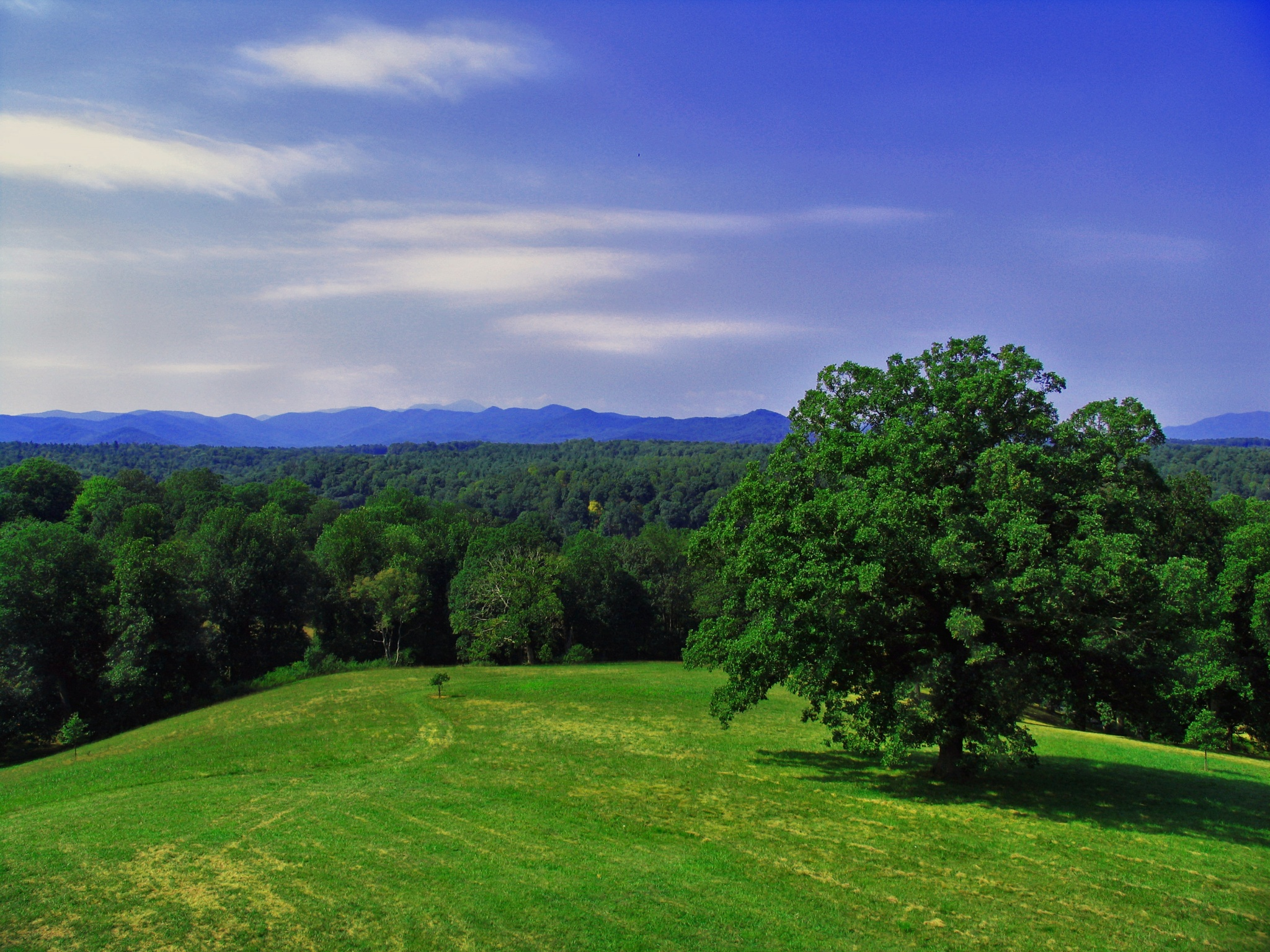 View from Biltmore by monarch